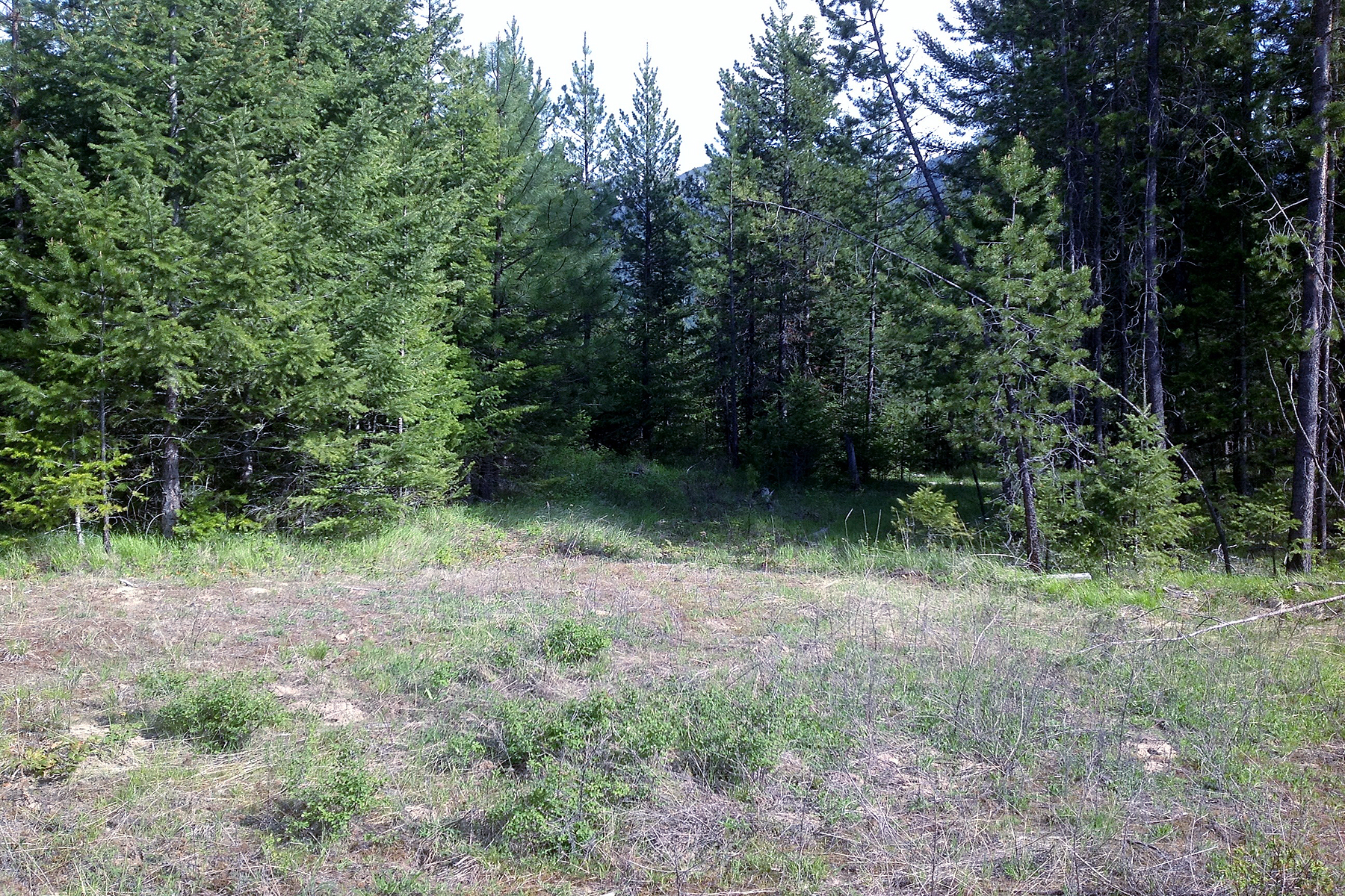 Terreno para Venda às Scenic Paradise Valley in North Idaho Lot 11 Inspiration Court Bonners Ferry, Idaho, 83805 Estados Unidos