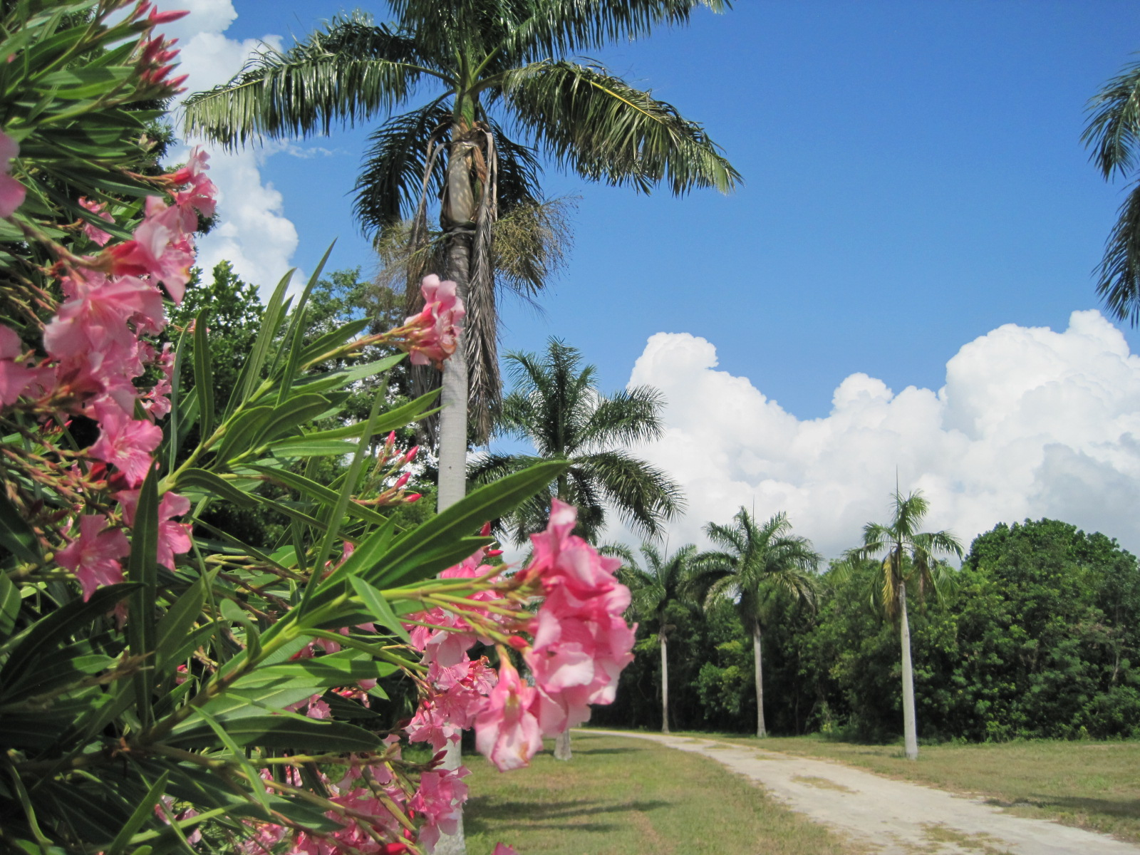 pour l Vente à 12,000 Ft. of Linear Gorgeous Beachfront Investment Opportunity Corozal, Corozal, Belize