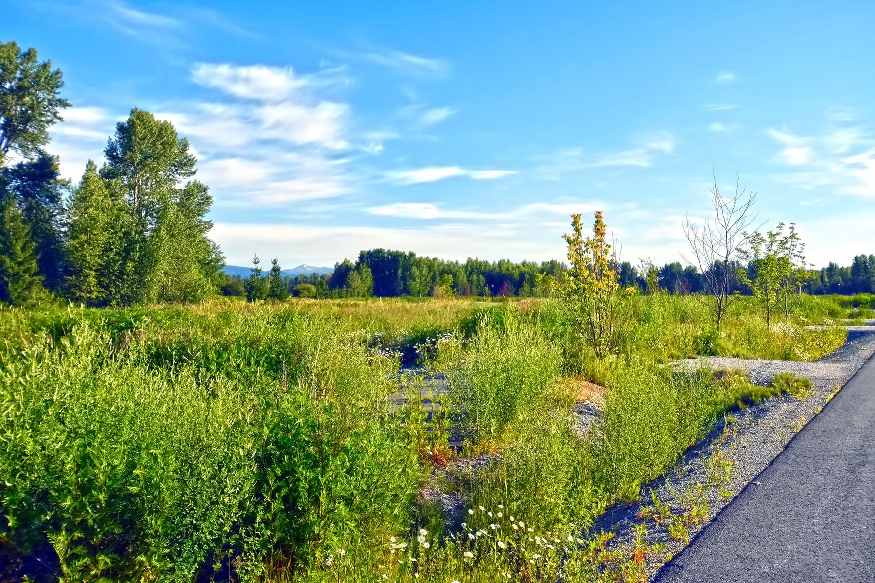 土地 為 出售 在 Seven Sisters Building Lots 44 Kuskanook Loop Kootenai, 愛達荷州, 83840 美國