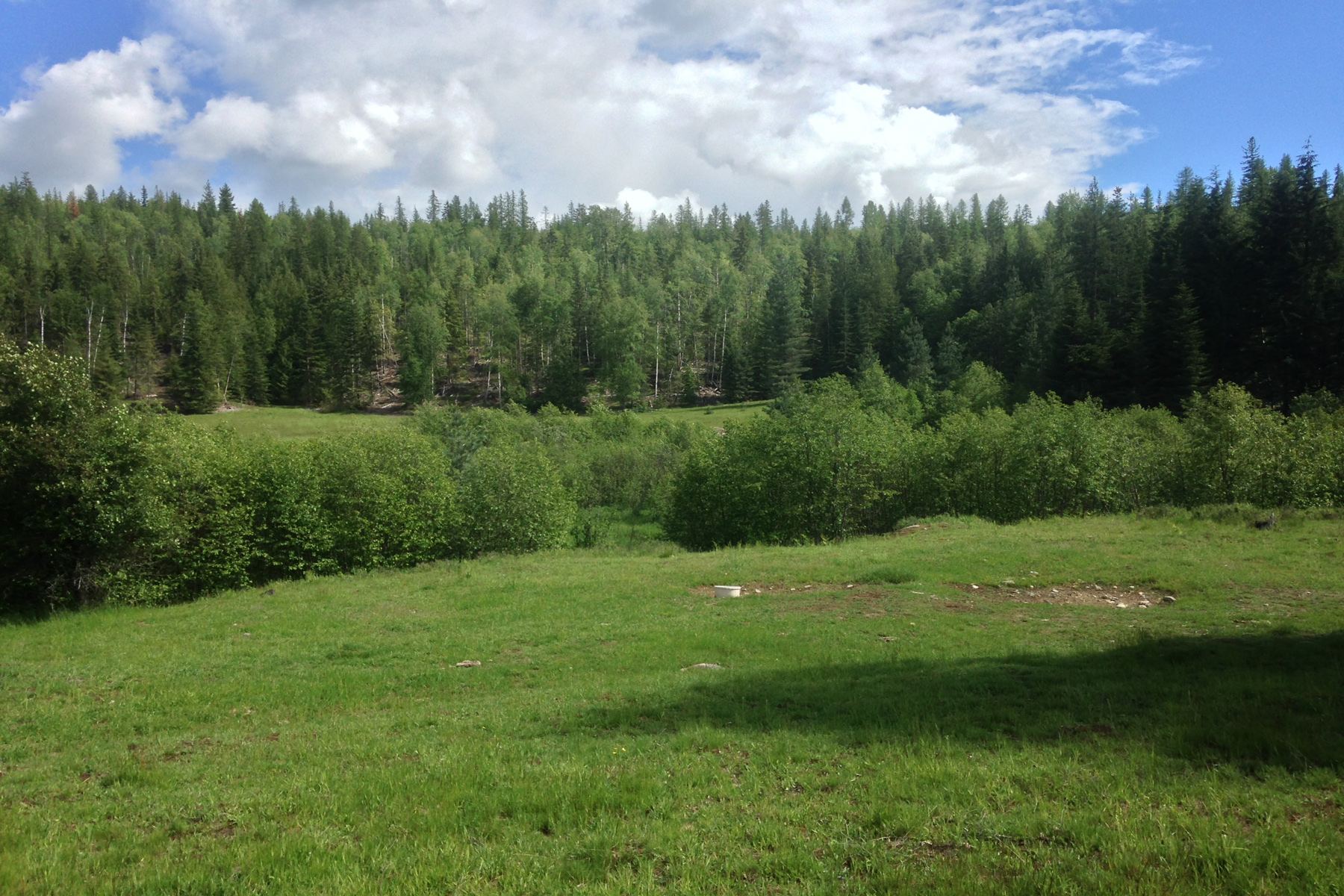 sales property at Very nice 50 acre parcel