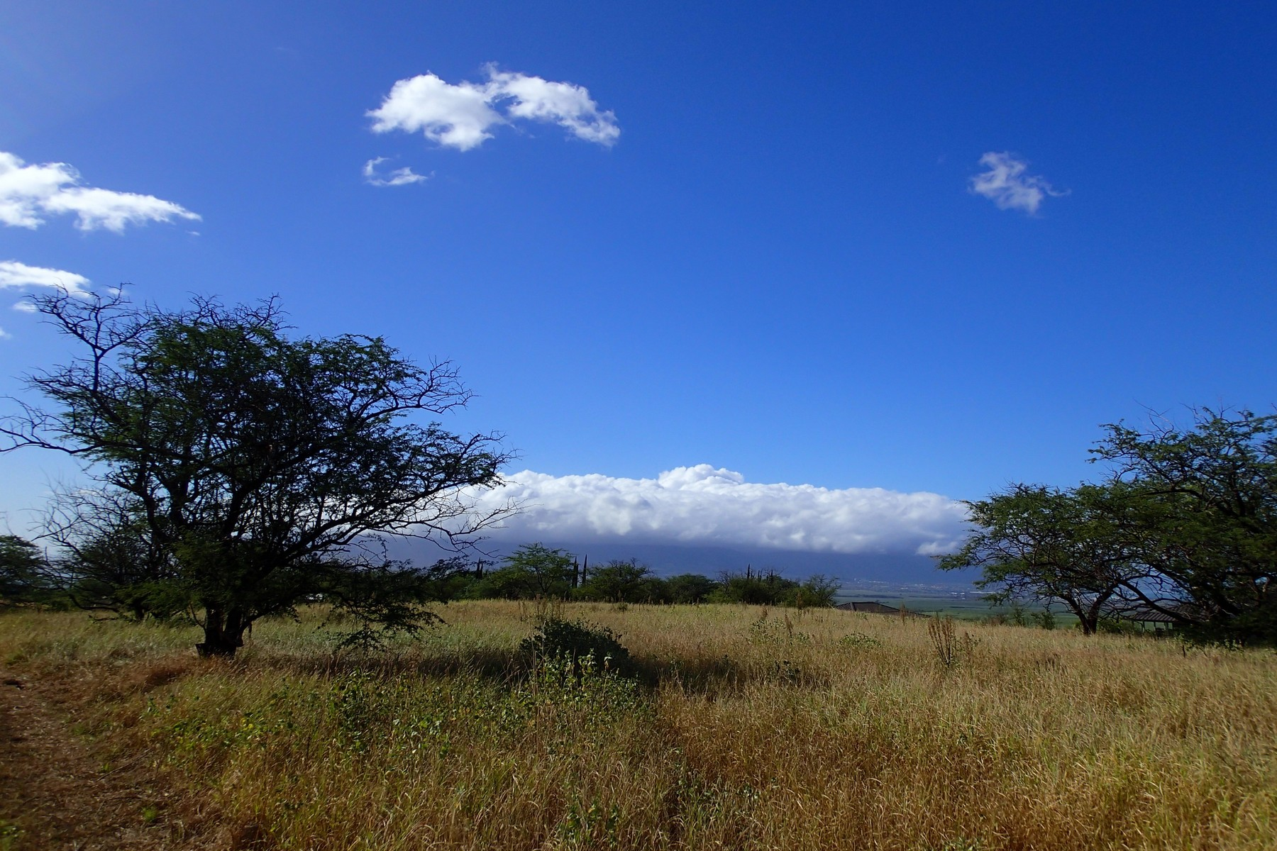 Property For Sale at 5.19 Acres in Desirable Lower Kula - Omaopio Ridge