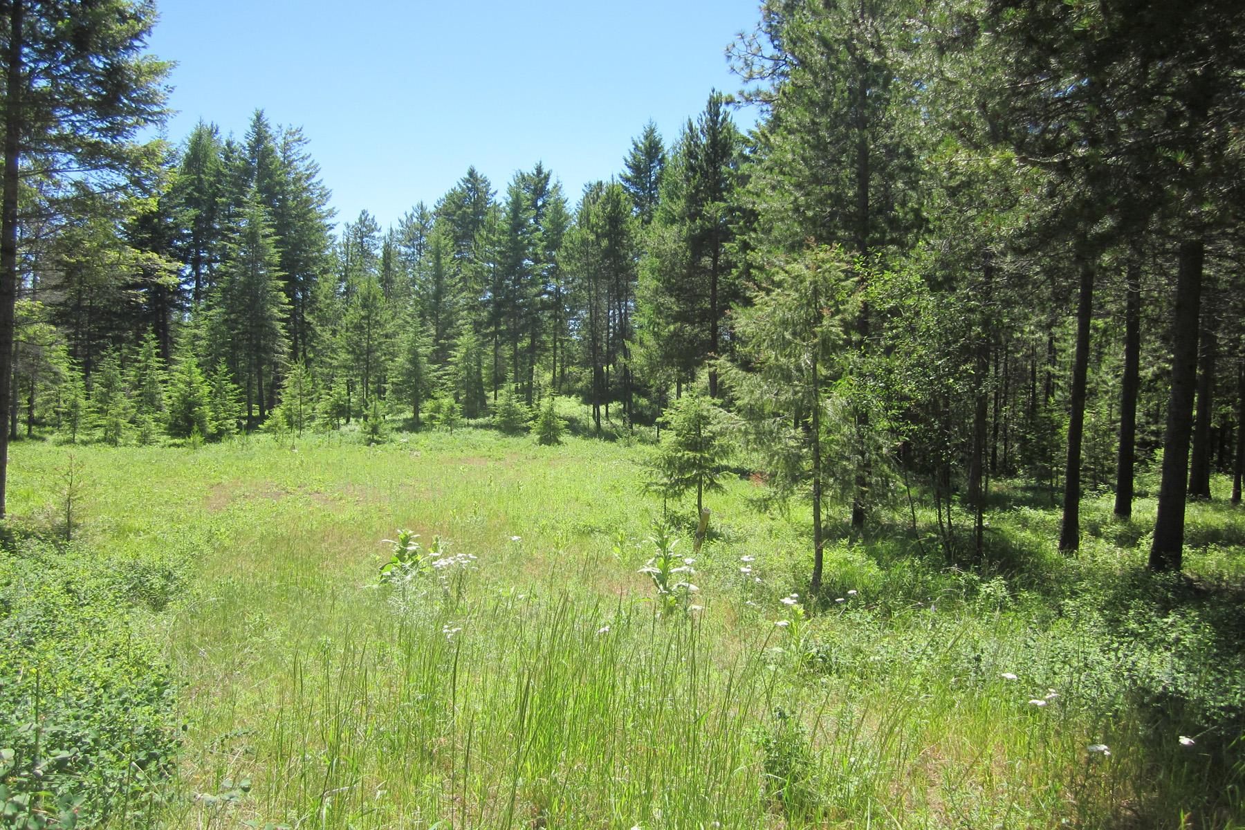 Terrain pour l Vente à Nicely treed acreage Heavenly Drive Lot 7 Bonners Ferry, Idaho 83805 États-Unis