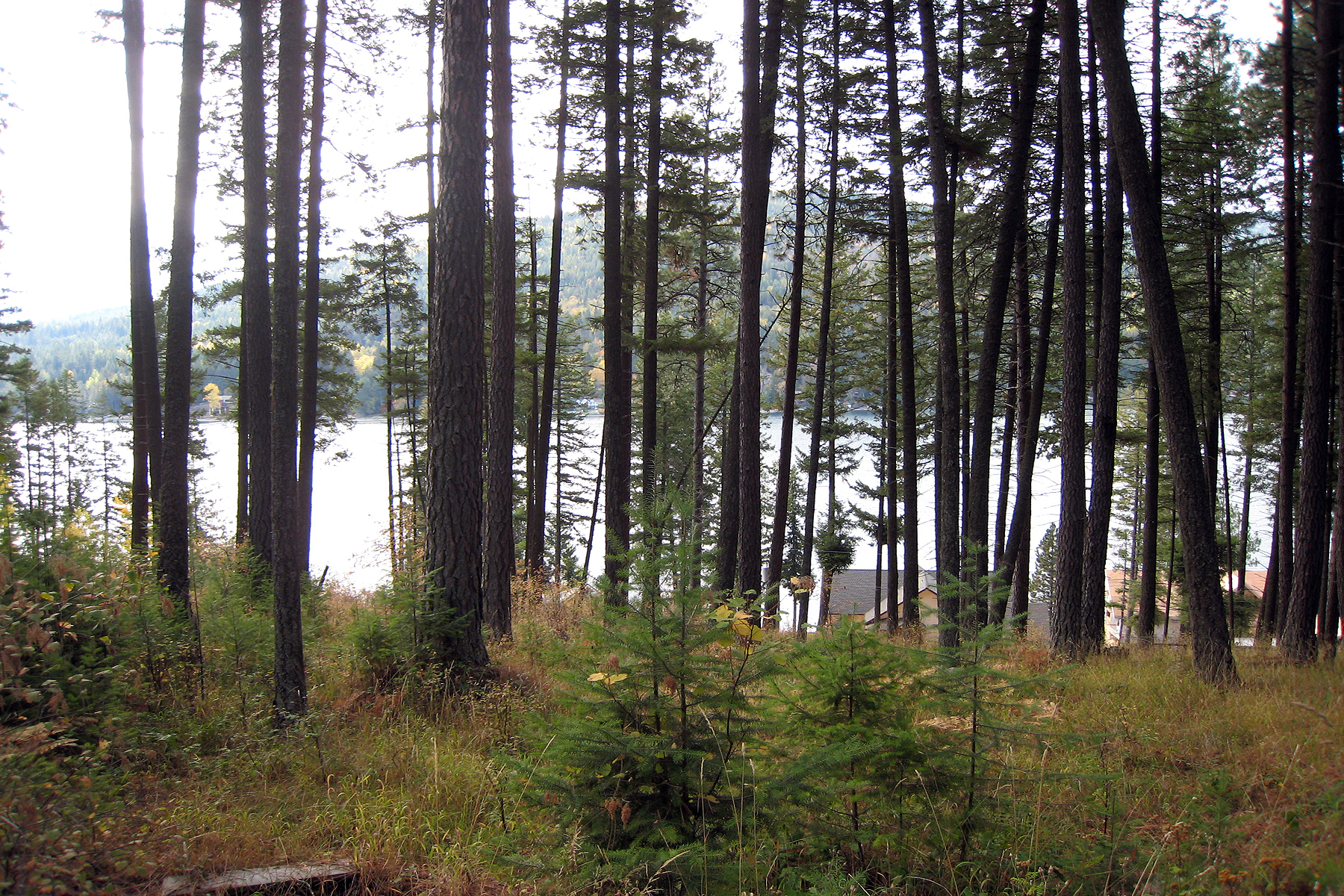Land for Sale at Ponder Point Waterfront Building Lots NNA Ponder Point Drive Sandpoint, Idaho 83864 United States