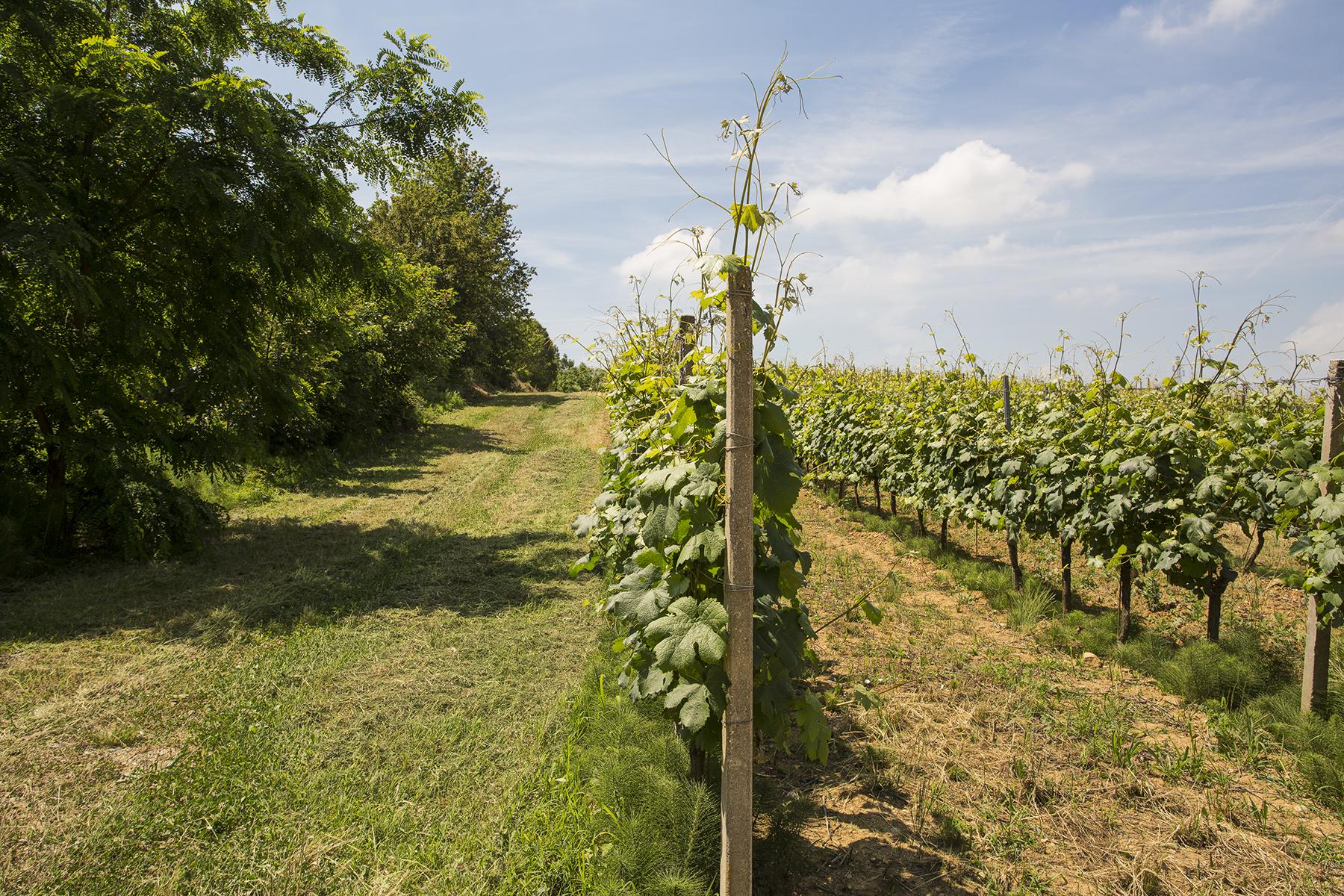 Maison unifamiliale pour l Vente à Farmhouse in the Gavi hills Strada di Monterotondo Gavi Autres Alessandria, Alessandria 15060 Italie