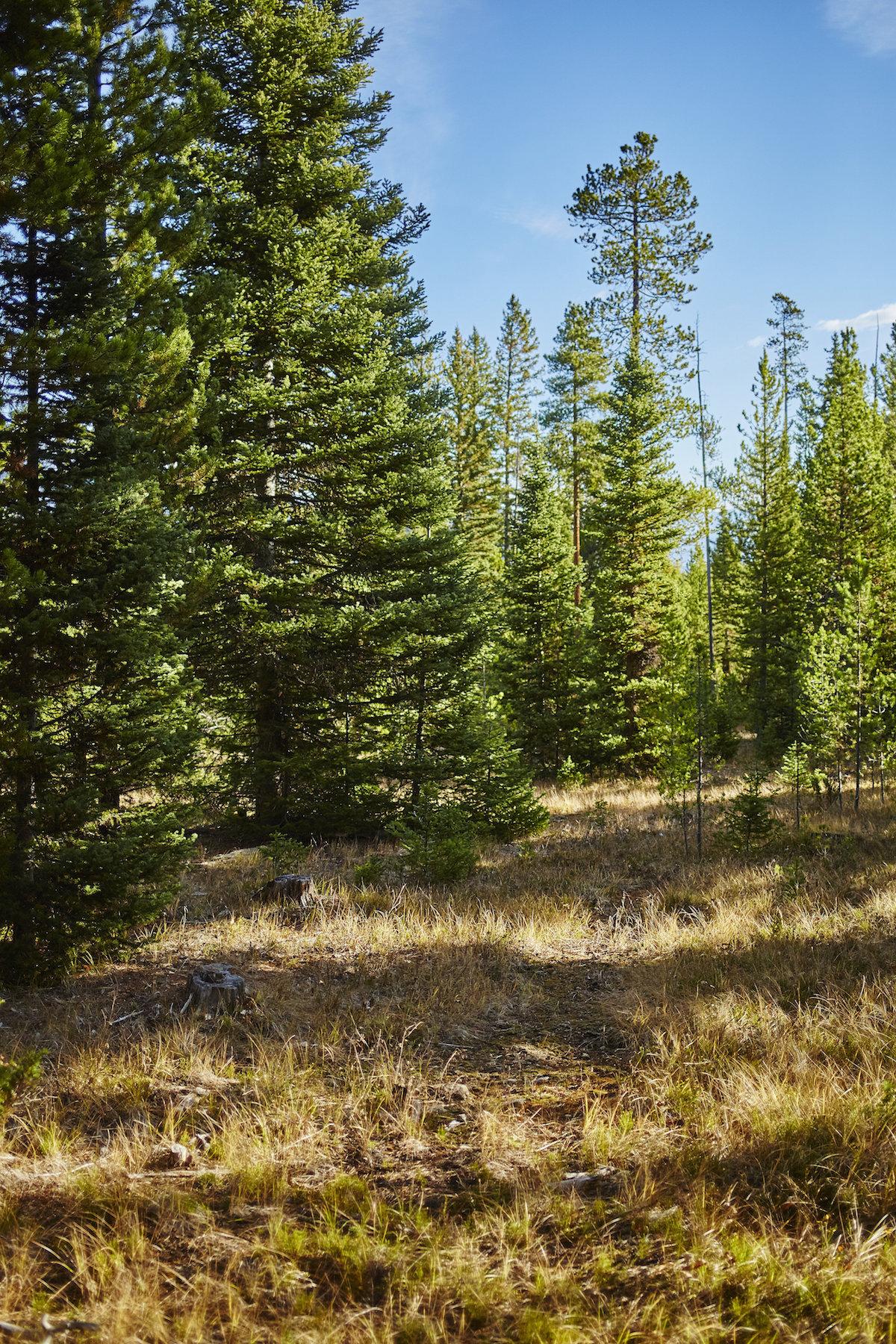 Terrain pour l Vente à Elk Ridge Ranch Parcel 13 Hyalite Road, Elk Ridge Ranch Parcel 13 Big Sky, Montana 59716 États-Unis