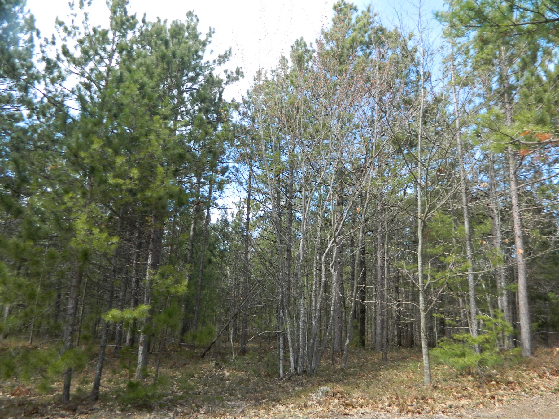 Land for Sale at Vacant Land near Stergeon Bay TBD Lake Shore Drive Harbor Springs, Michigan, 49740 United States