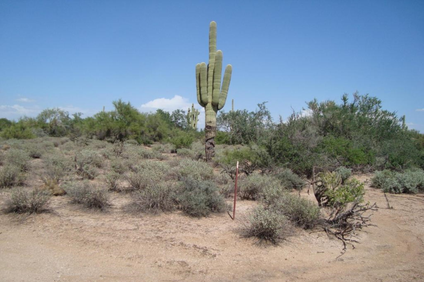Maison unifamiliale pour l Vente à A perfect 2.5 acre parcel ready for you to build that dream home. 27XXX N 77th ST 2.5 AC Scottsdale, Arizona 85266 États-Unis