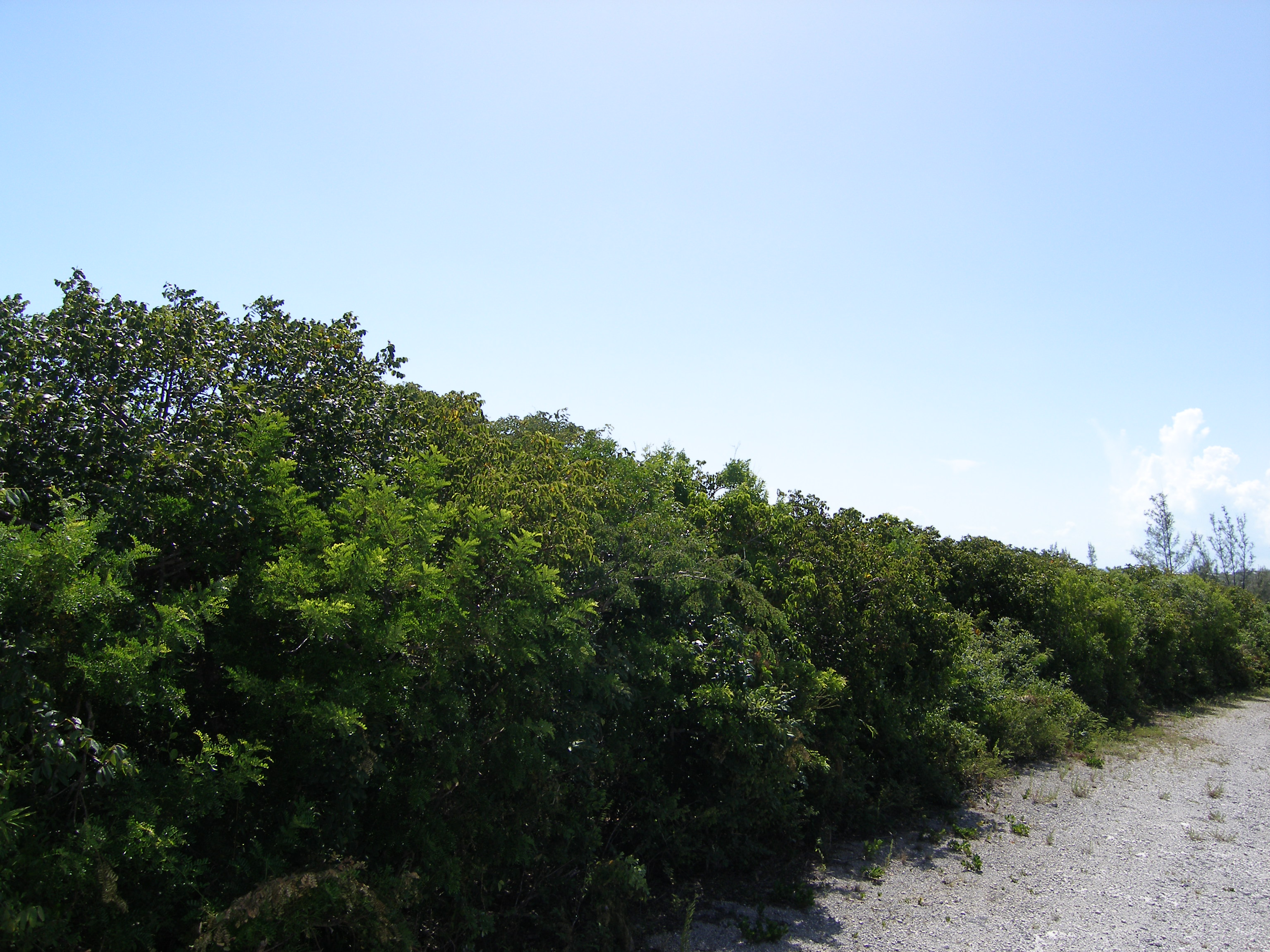 Terreno por un Venta en Residential Lot near Rainbow Beach Rainbow Bay, Eleuthera Bahamas