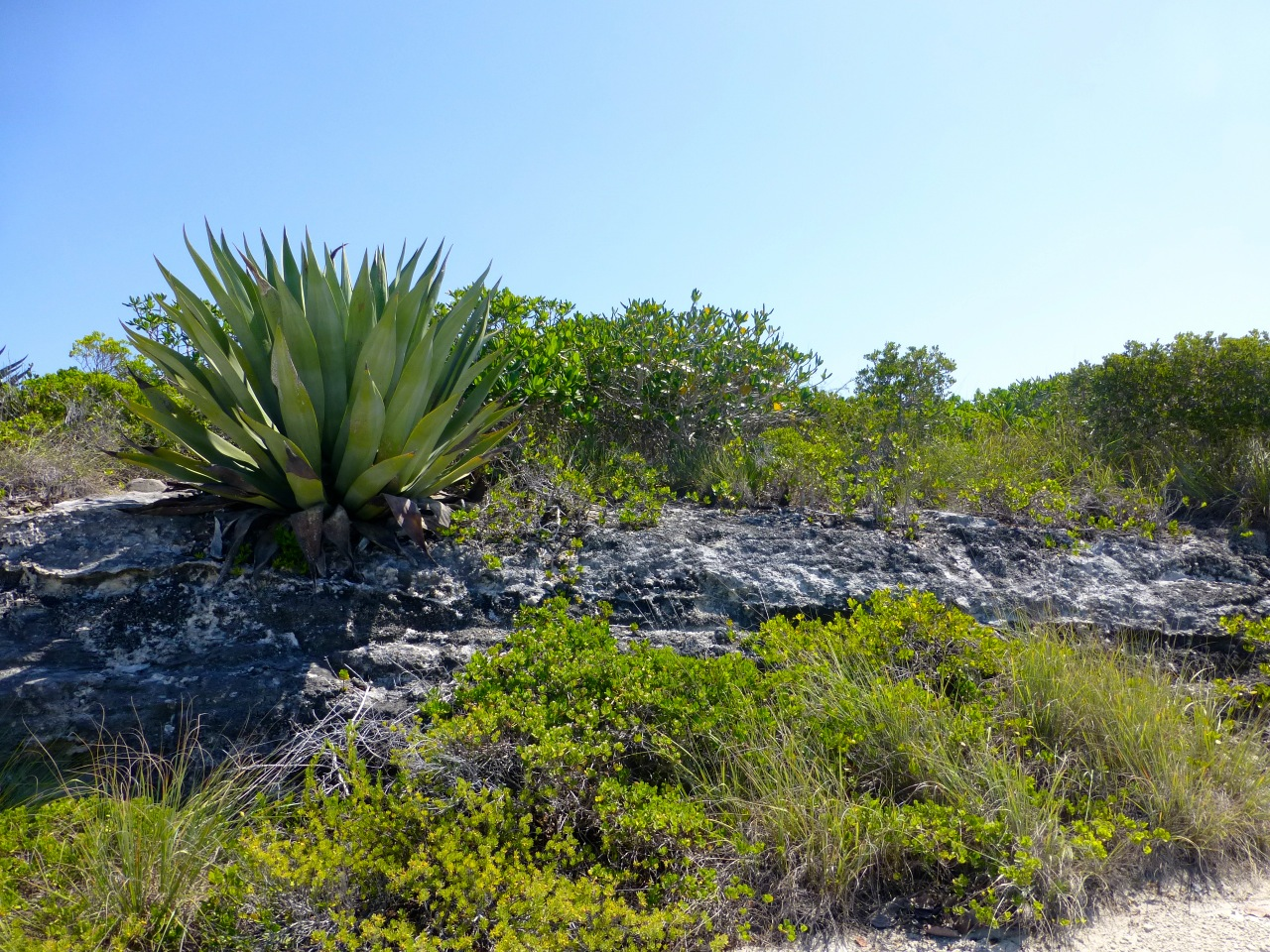 Land for Sale at Dramatic Ocean View in Whale Point Whale Point, Eleuthera Bahamas
