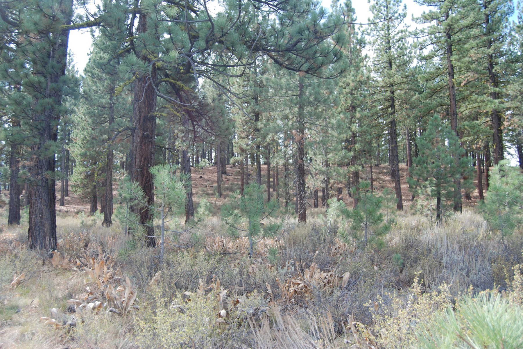 Land for Sale at 7500 Lahontan Drive Truckee, California 96161 United States