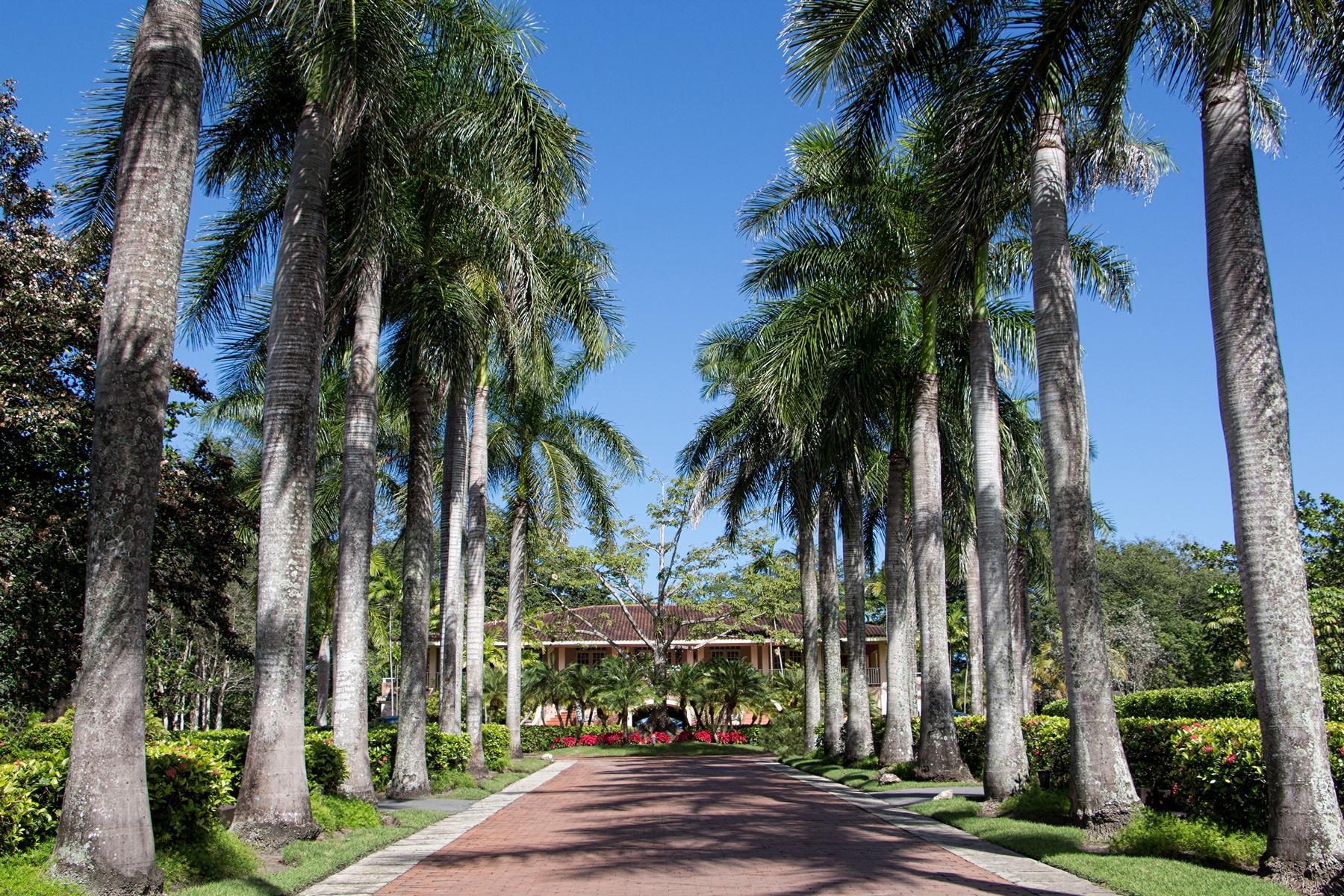 Additional photo for property listing at Dorado Beach East Unique Lot Opportunity 323 Dorado Beach East Dorado Beach, Puerto Rico 00646 Puerto Rico