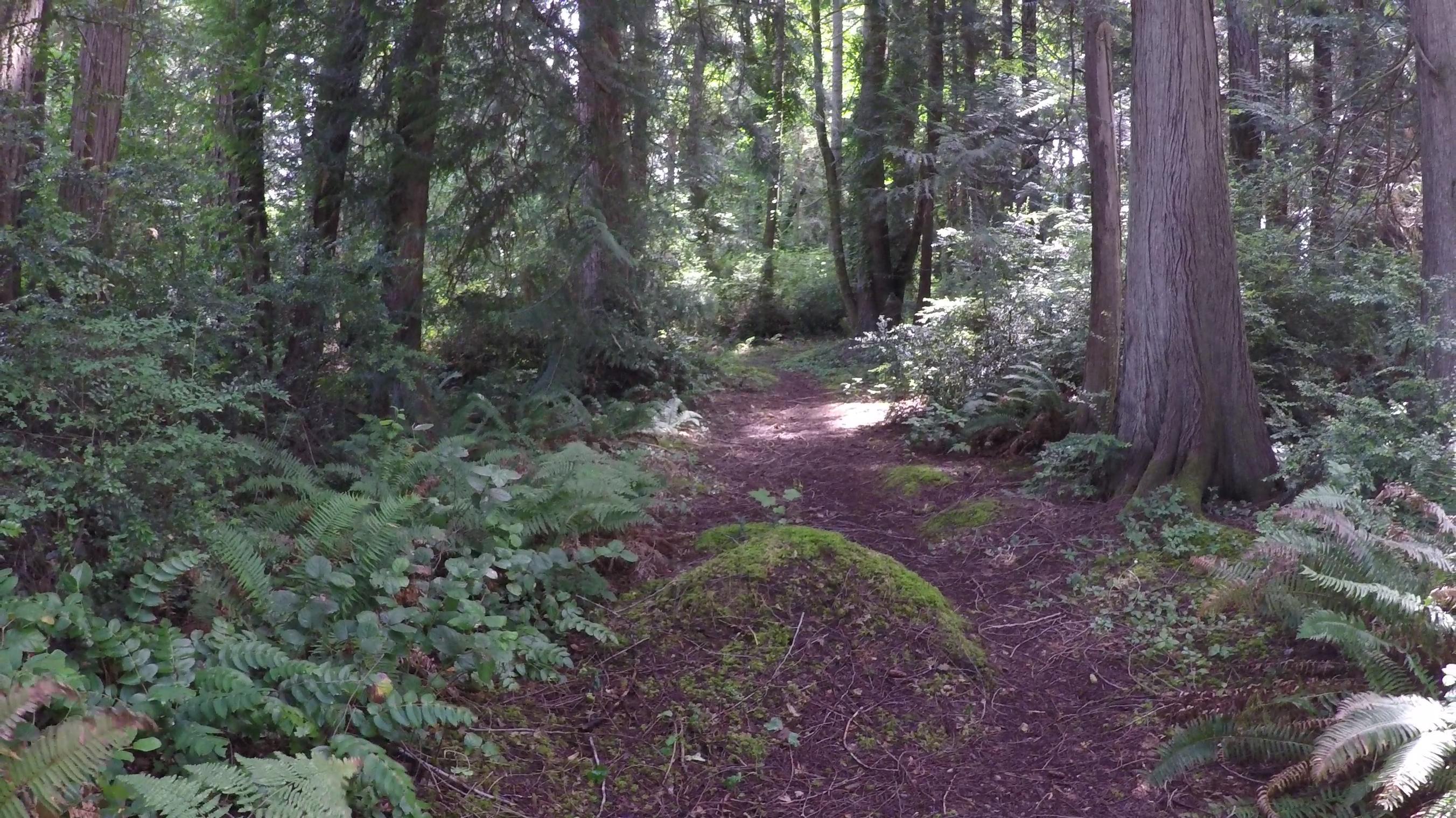 Land for Sale at Rosedale Land 8416 93rd St Ct NW Gig Harbor, Washington, 98332 United States