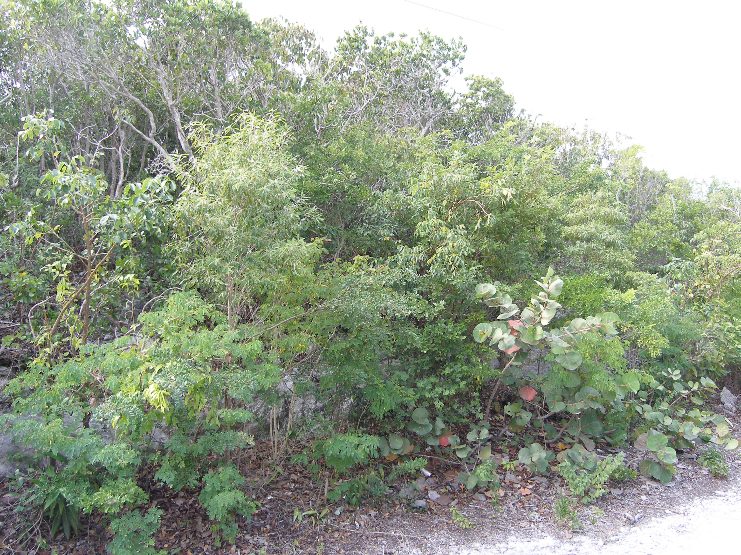 Additional photo for property listing at Eleuthera Island Shores Gregory Town, Eleuthera Bahamas
