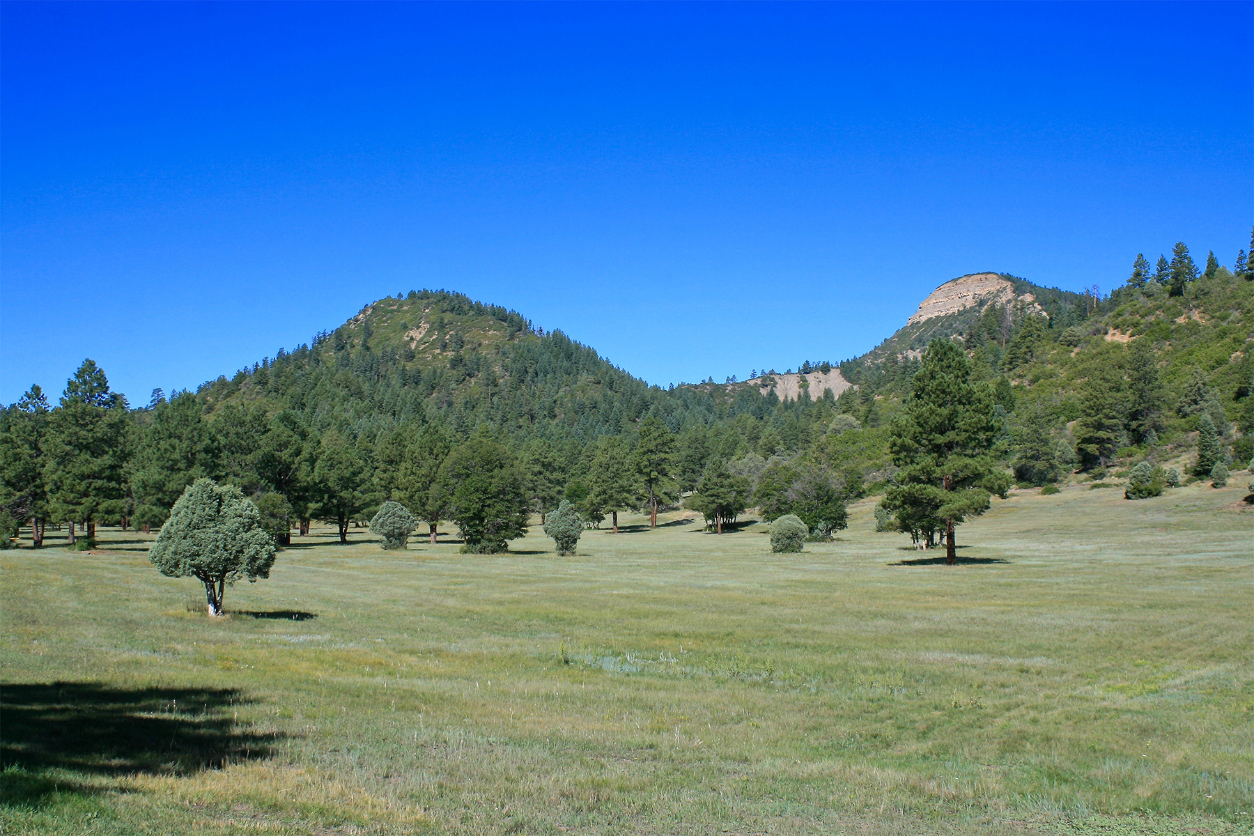 Farm / Ranch / Plantation for Active at Taylor Canyon Ranch 8231 CR 500 Pagosa Springs, Colorado 81147 United States