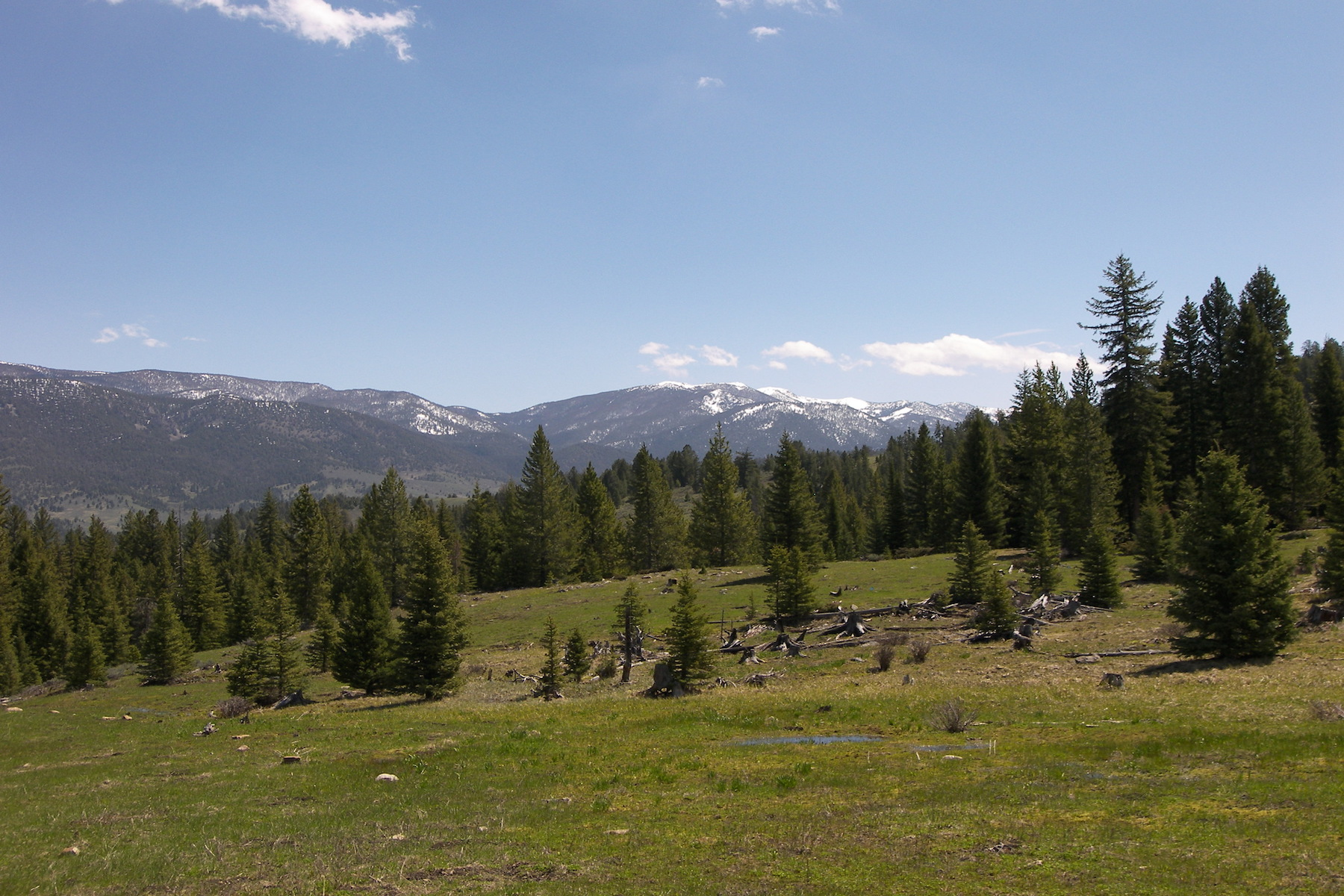 Land for Sale at Private Towering Pines Acreage Towering Pines Lot 14 Big Sky, Montana, 59716 United States