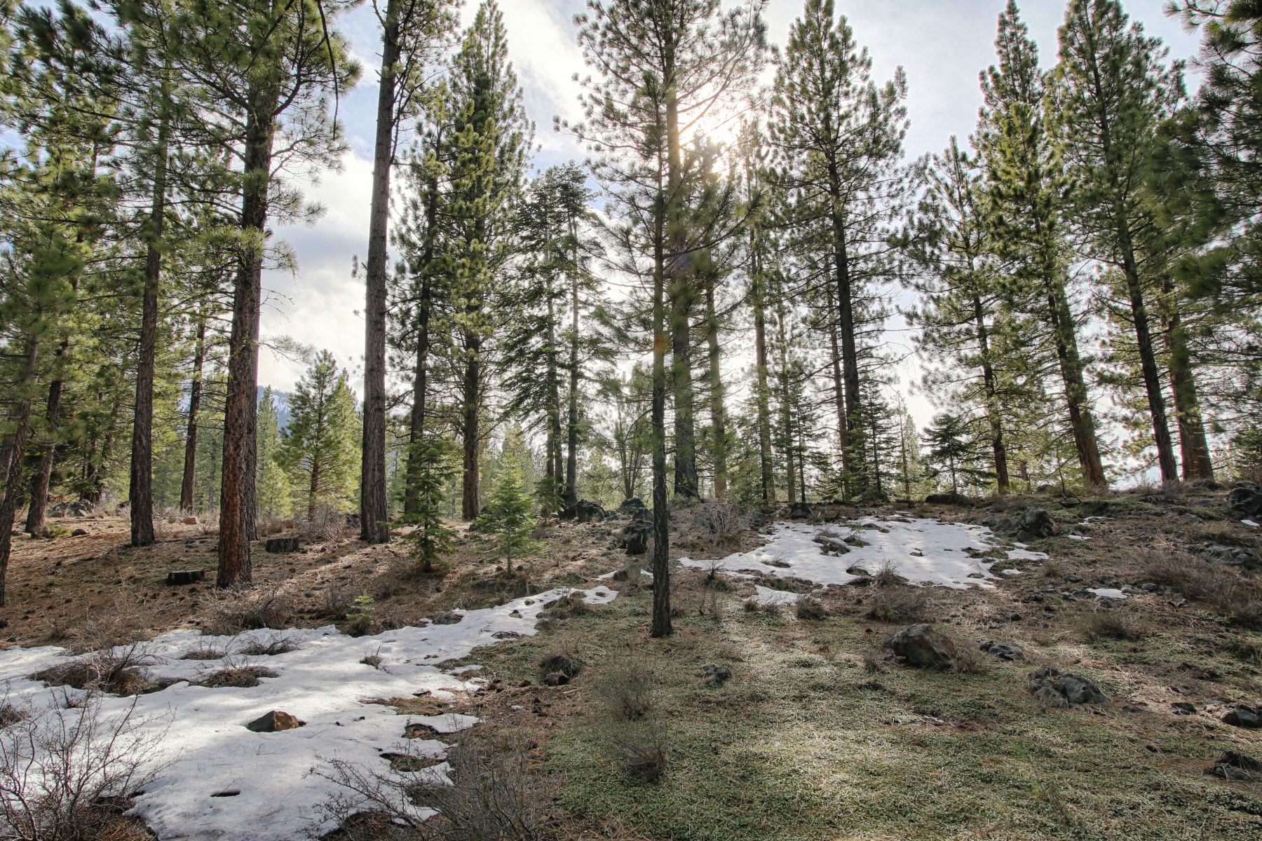 Additional photo for property listing at 524 Lars Haugen  Truckee, California 96161 Estados Unidos