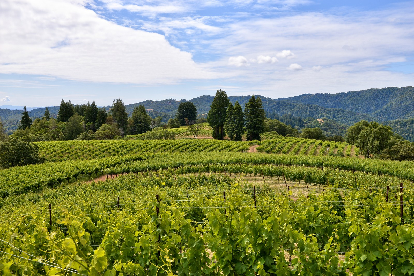 sales property at Healdsburg Vineyard Property