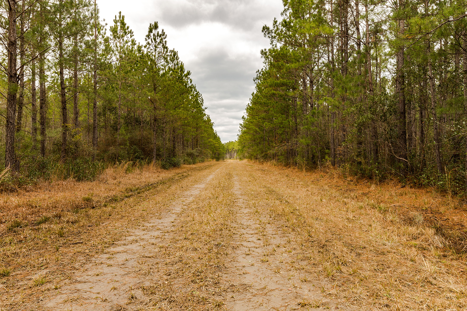 Land for Sale at Planters Forest Plantersville Rd Georgetown, South Carolina 29440 United States