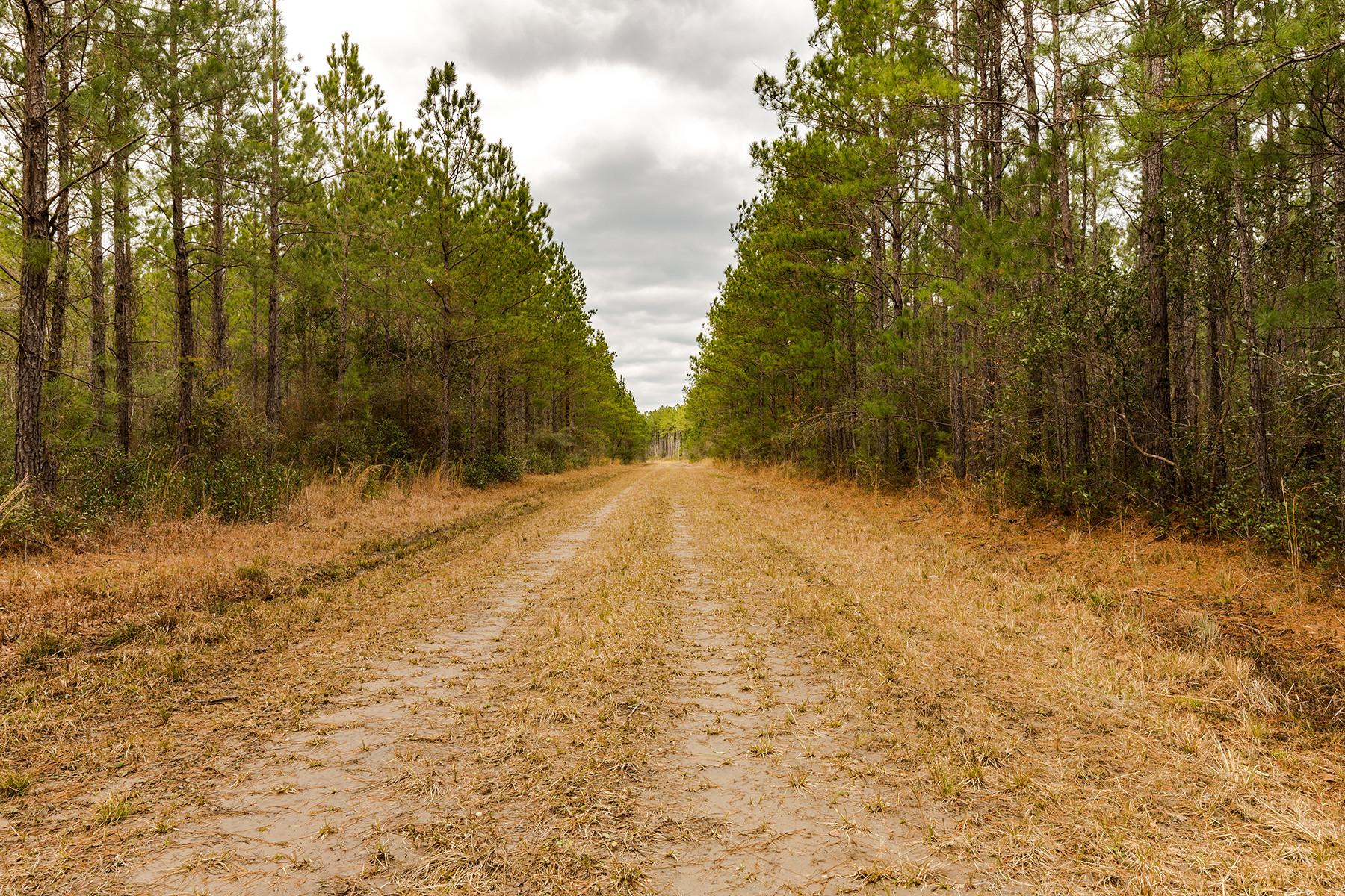 Terreno para Venda às Planters Forest Plantersville Rd Georgetown, Carolina Do Sul, 29440 Estados Unidos