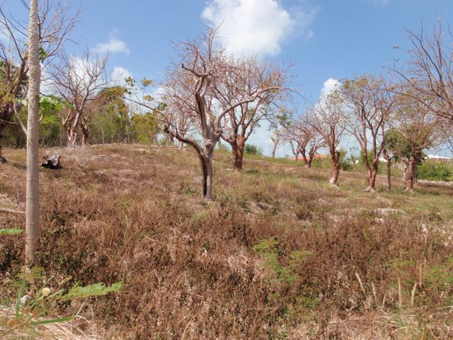 Additional photo for property listing at Elevated Harbour View Lot Spanish Wells, Eleuthera Bahamas