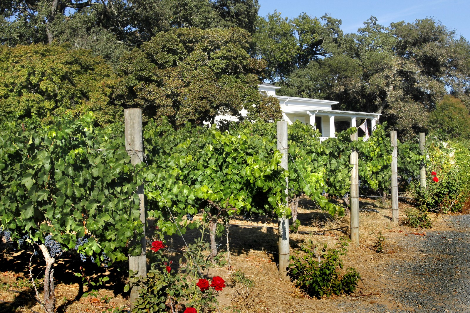 Additional photo for property listing at Annadel Estate Winery  Santa Rosa, Californie 95409 États-Unis