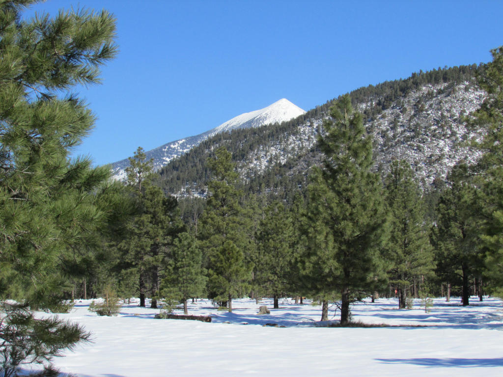 土地 为 销售 在 Stunning Mountain Views Par 5 Tract 8m Lockett Ranches Flagstaff, 亚利桑那州 86001 美国