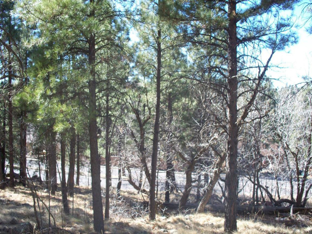 Land for Sale at Centrally Located Lot 1110 N Worthington Place Flagstaff, Arizona 86001 United States