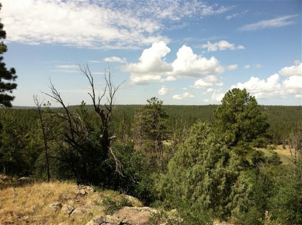 Terreno por un Venta en Gorgeous Acreage 3373 Cione Ranch RD Flagstaff, Arizona 86001 Estados Unidos