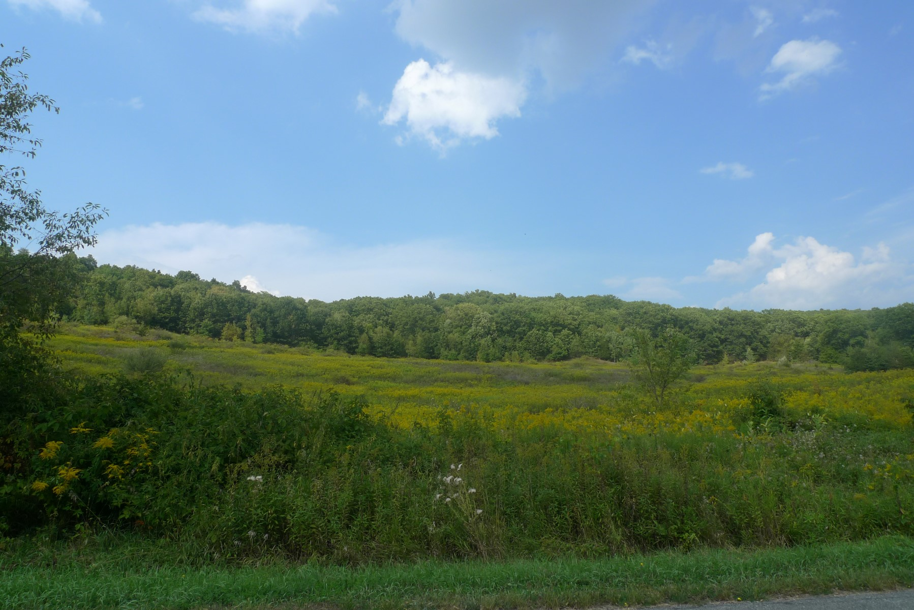 Land for Sale at Meadows & Water 1-A Sigler Road Pine Plains, 12567 United States