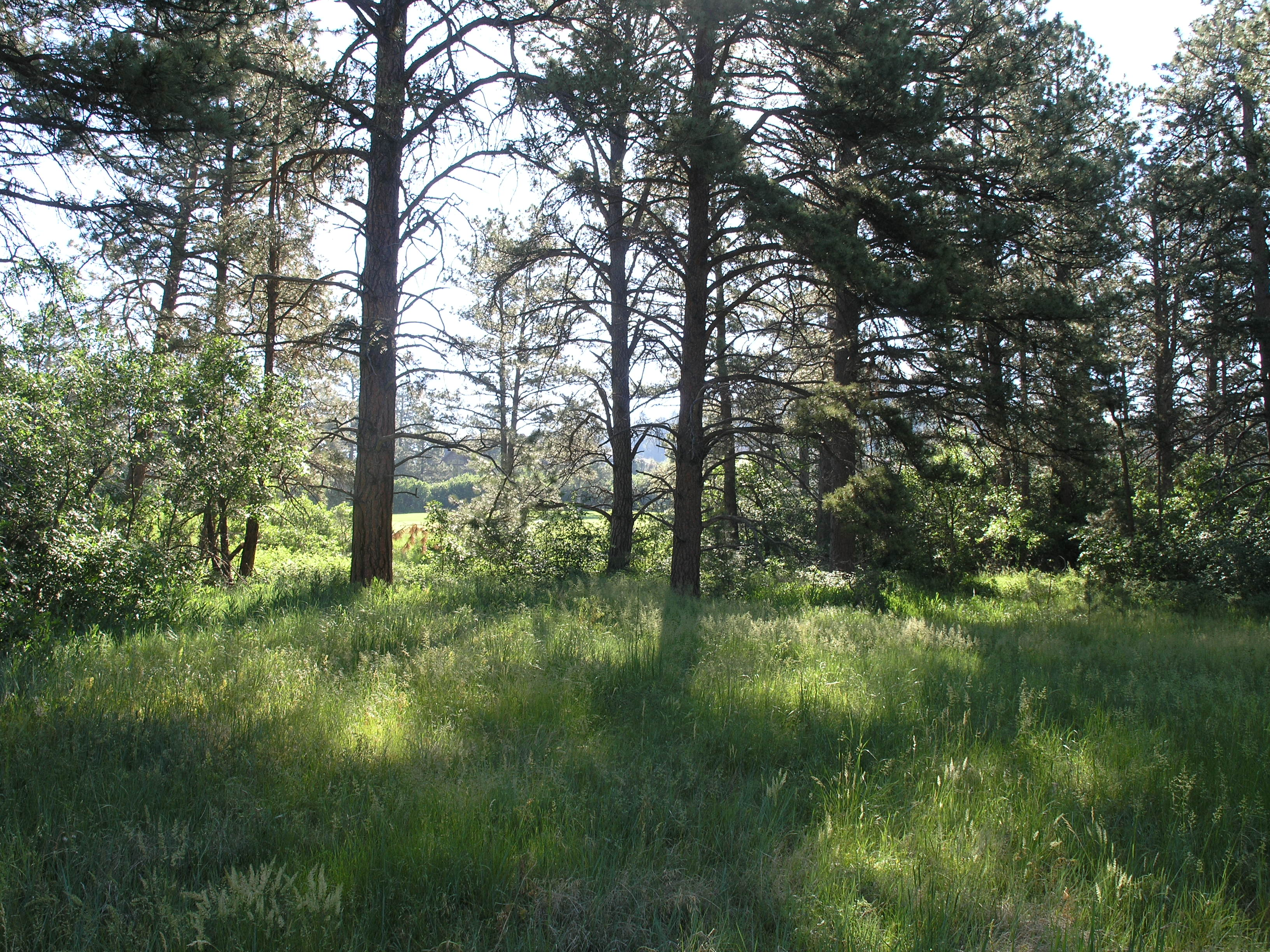 Land for Sale at 948 Country Club Pkwy Castle Pines Village, Castle Rock, Colorado 80108 United States