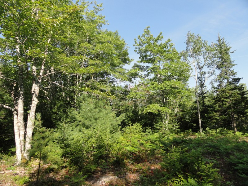 Land for Sale at Bluff Road Lot 2 Lot 2 Bluff Road Bar Harbor, Maine, 04609 United States