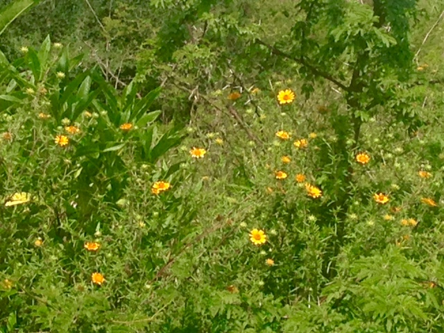 Additional photo for property listing at La Cieniguita near Otomi Country Property, San Miguel De Allende, Guanajuato Mexico