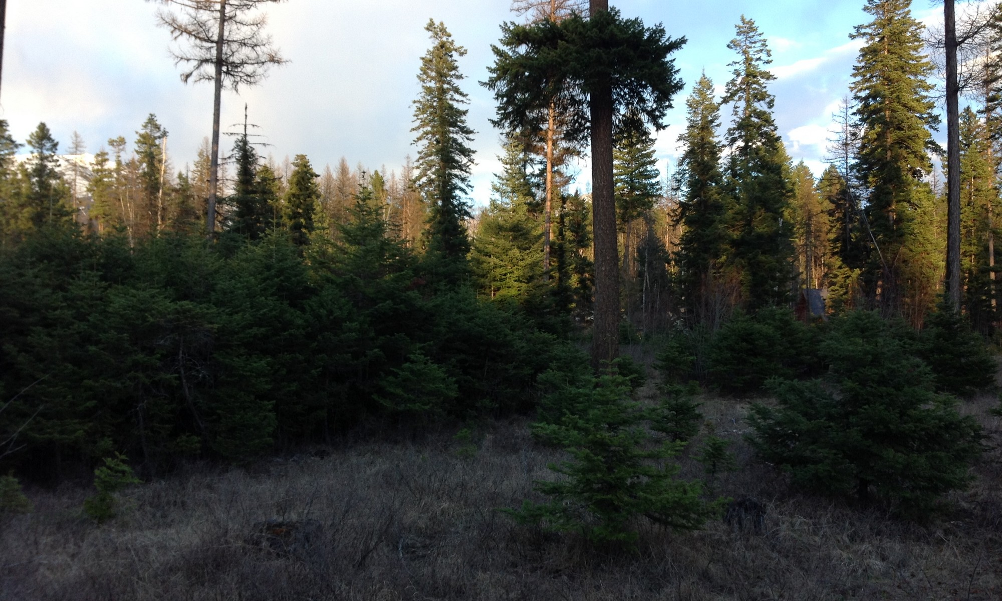 Property For Sale at Kootenai Woods Lot