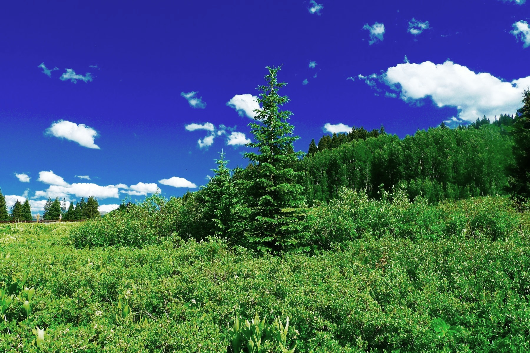 Land for Sale at Mountain Homesite with Fantastic Views TBD Ptarmigan/Porcupine Court Prospect Lot C-17 Mount Crested Butte, Colorado, 81225 United States