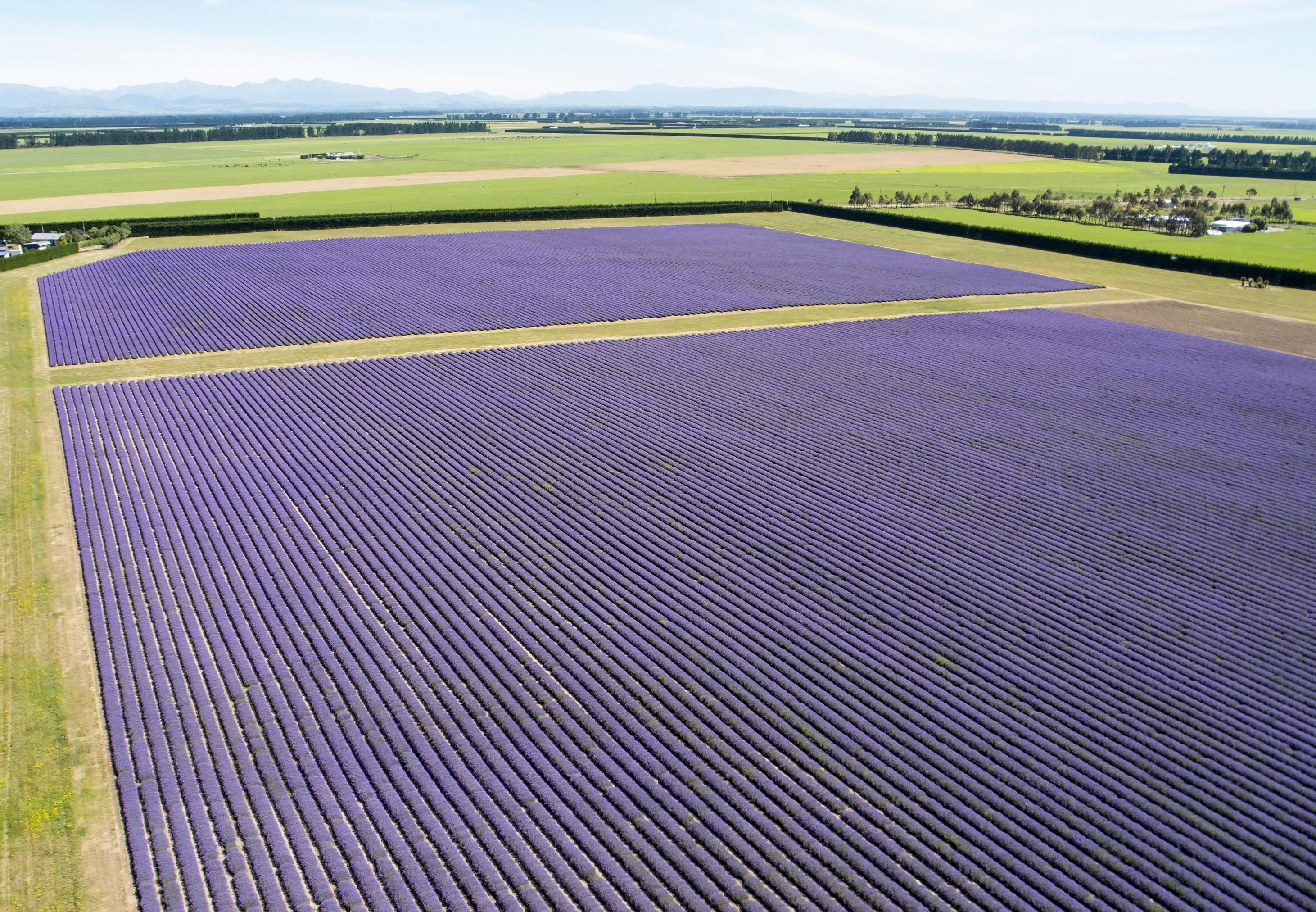 Farm / Ranch / Plantation for Sale at NZLavender Christchurch, Canterbury New Zealand