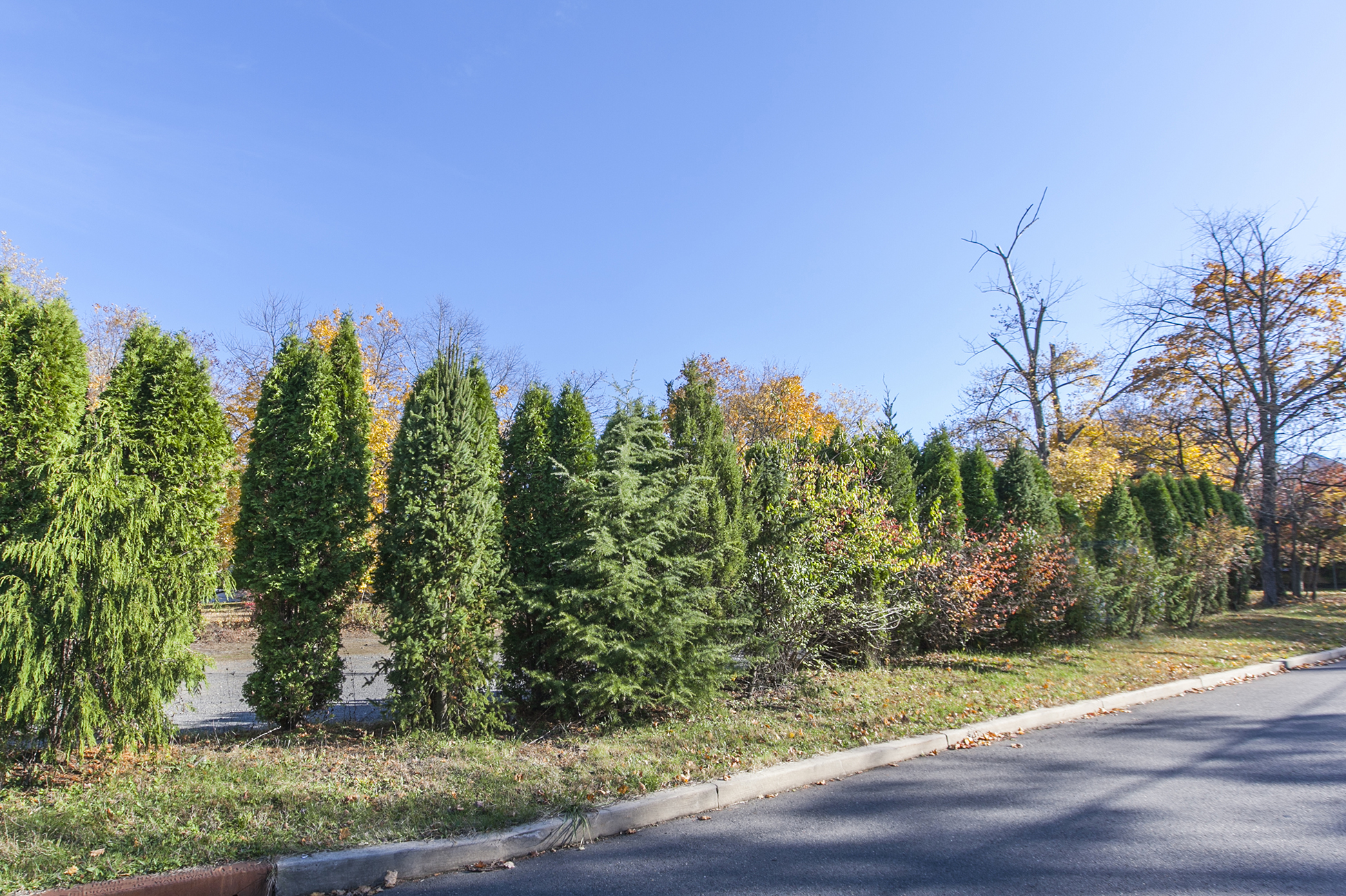 Land for Sale at Build Your Dream House Here! 19 Columbia Avenue Hopewell, New Jersey 08525 United States