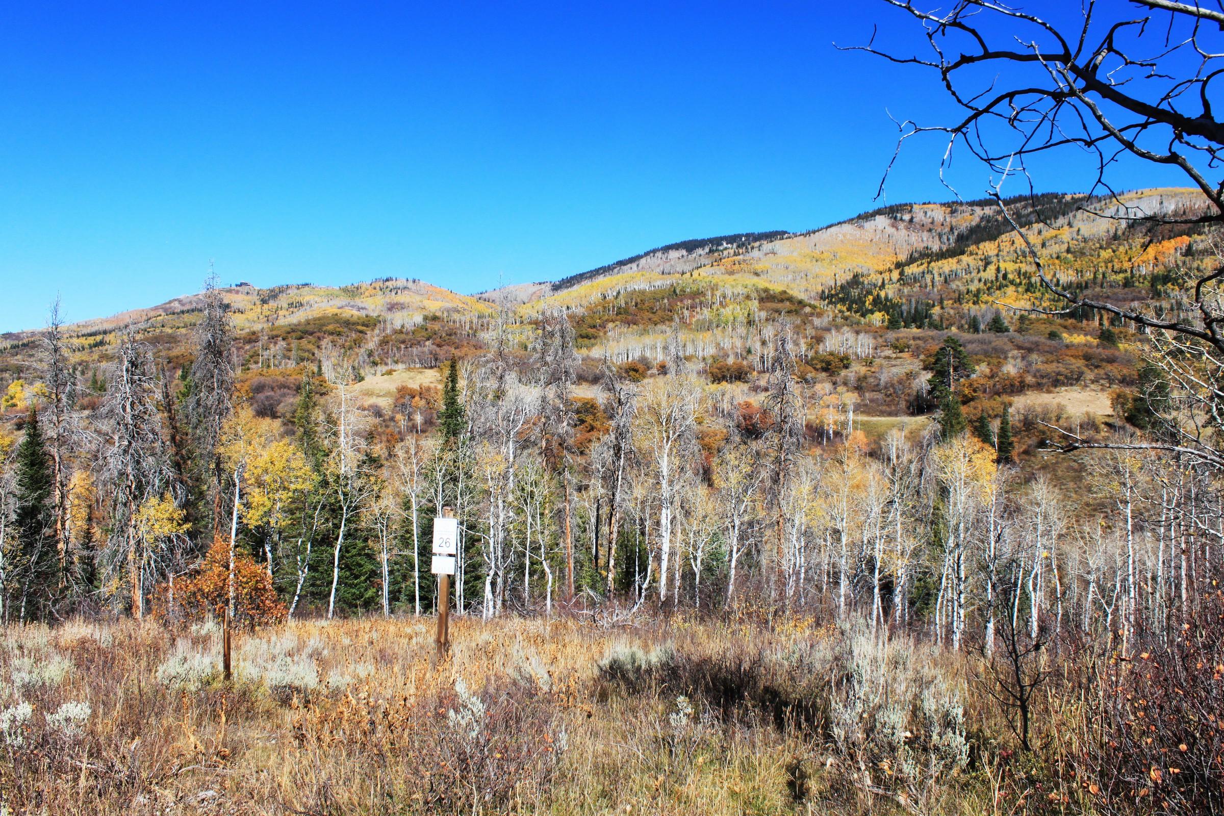 Terrain pour l Vente à Alpine Mountain Ranch 34510 Golden Eagle Dr. Steamboat Springs, Colorado, 80487 États-Unis