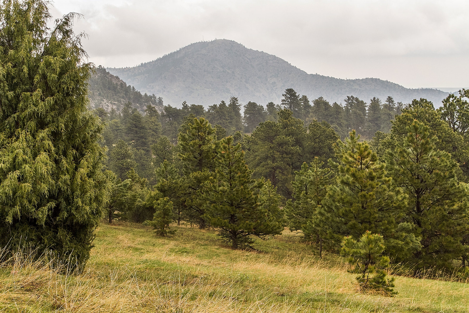 Land for Sale at Fabulous Falcon Wing Ranch 35 Acre Building Site 3996 Talon Trail Indian Hills, Colorado 80454 United States