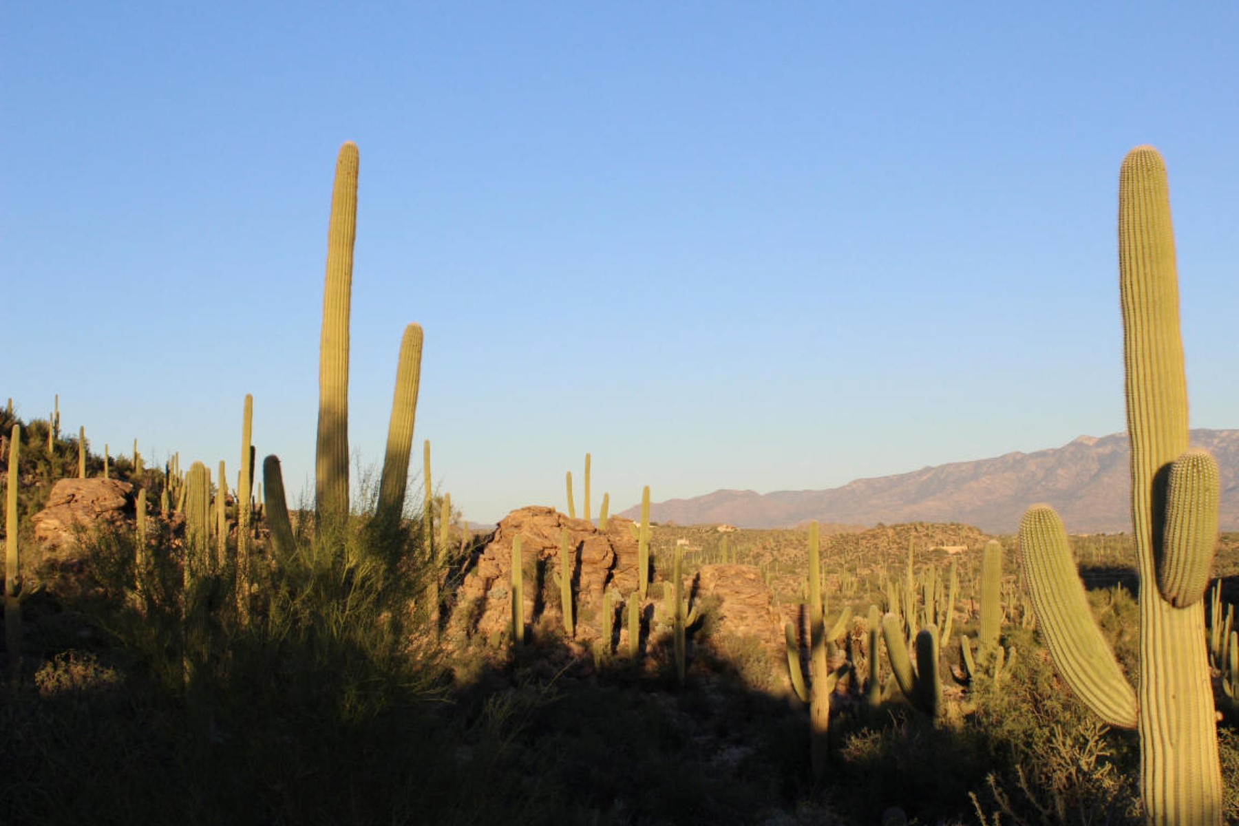 sales property at Saguaro Ranch custom homesite with wonderful mountain views