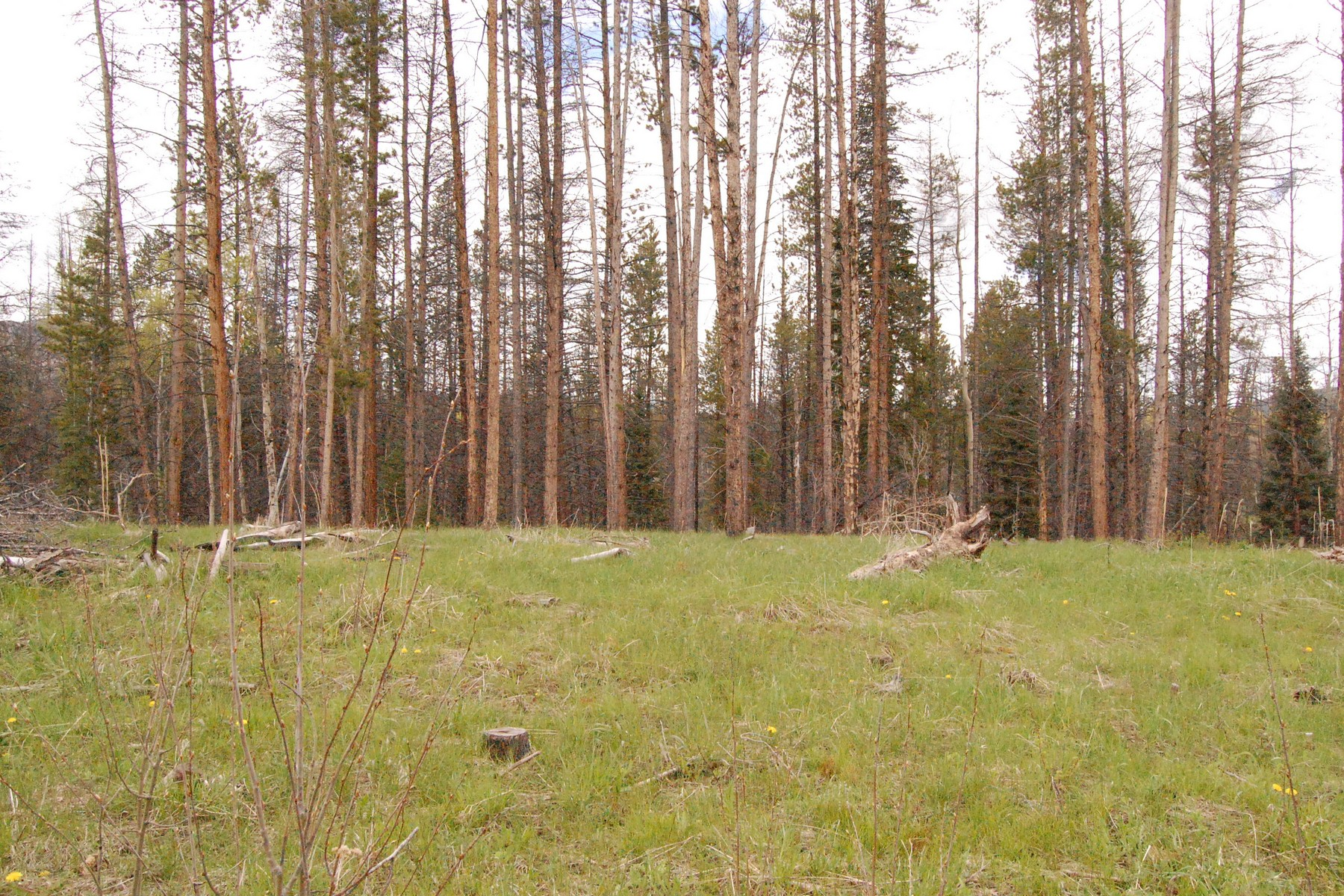 Land for Sale at Lovely .99 Acre Lot in Stagecoach TBD Lot 68 Sky Hitch IV at Stagecoach Oak Creek, Colorado, 80467 United States