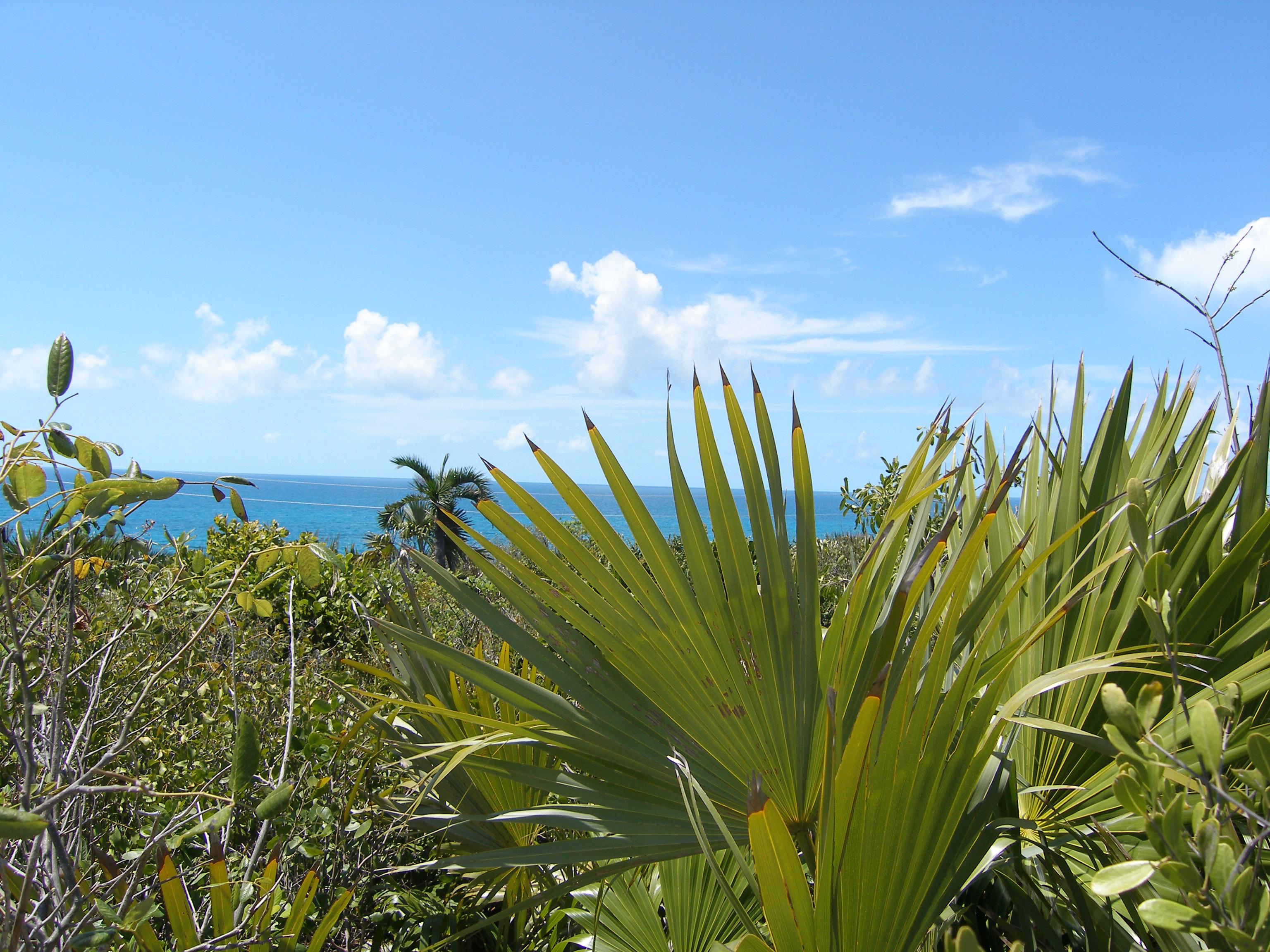 Land für Verkauf beim Lot 6, Block 14, Section A Rainbow Bay, Eleuthera Bahamas