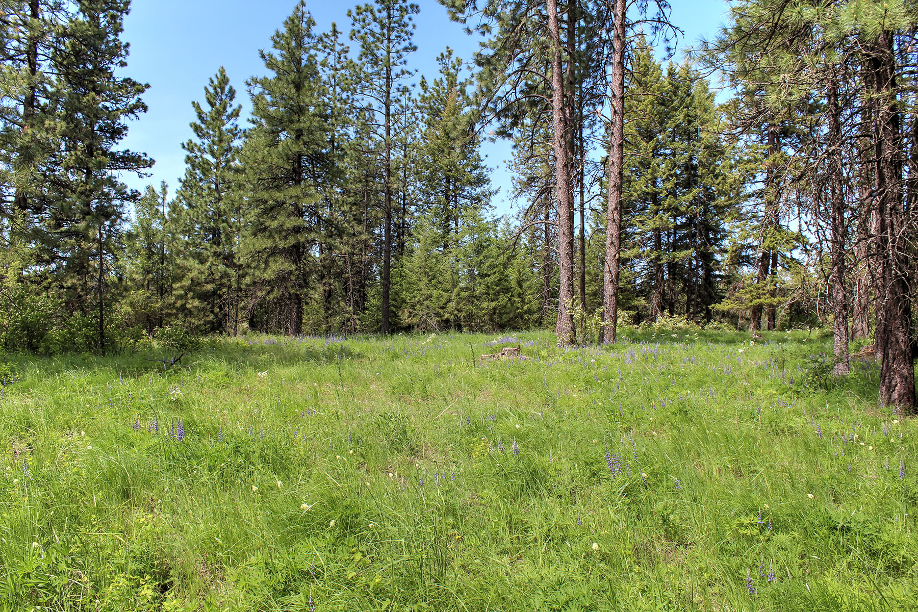 Land for Sale at Beautiful building parcels. Lot 10 Diamond Heights Rd Oldtown, Idaho, 83822 United States