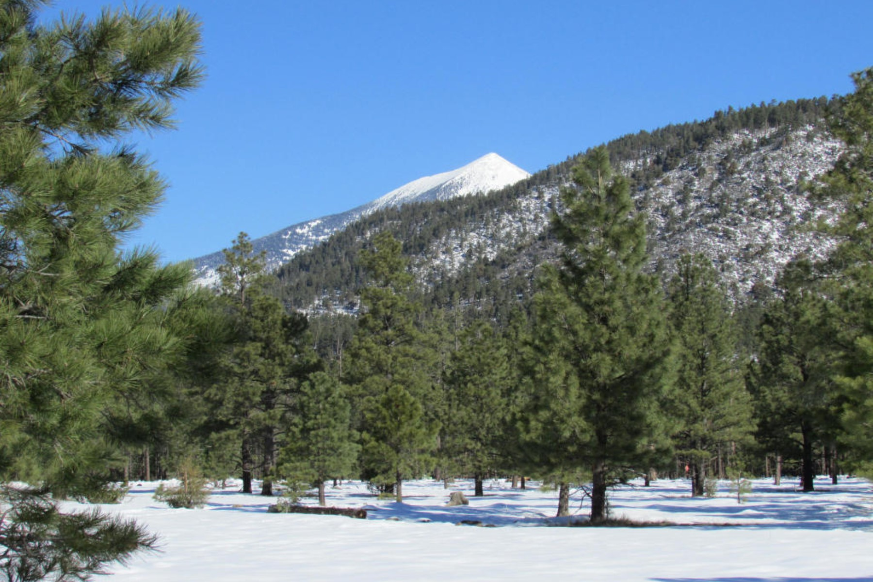 Land for Sale at Parcel 3 of Tract 8M, Lockett Ranches Par 3 Tract 8m Lockett Ranches Flagstaff, Arizona, 86001 United States