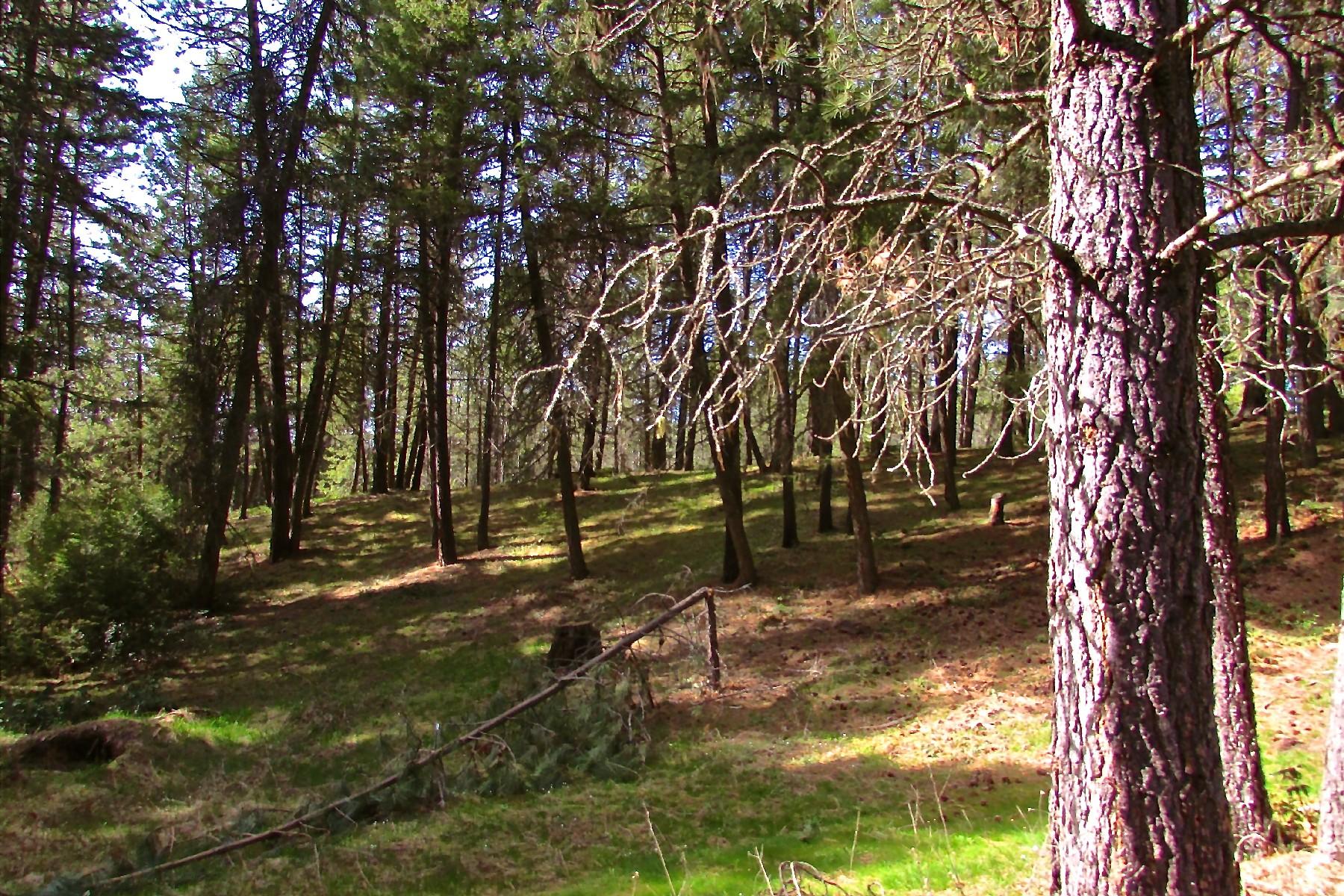 Land for Sale at On the 19th Hole! NKA Blk1 lot 1516 Hanaford Blanchard, Idaho, 83804 United States