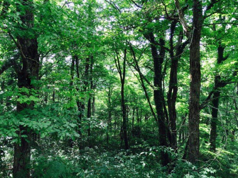 Земля для того Продажа на Bobby Jones Road Highlands, Северная Каролина 28741 Соединенные Штаты
