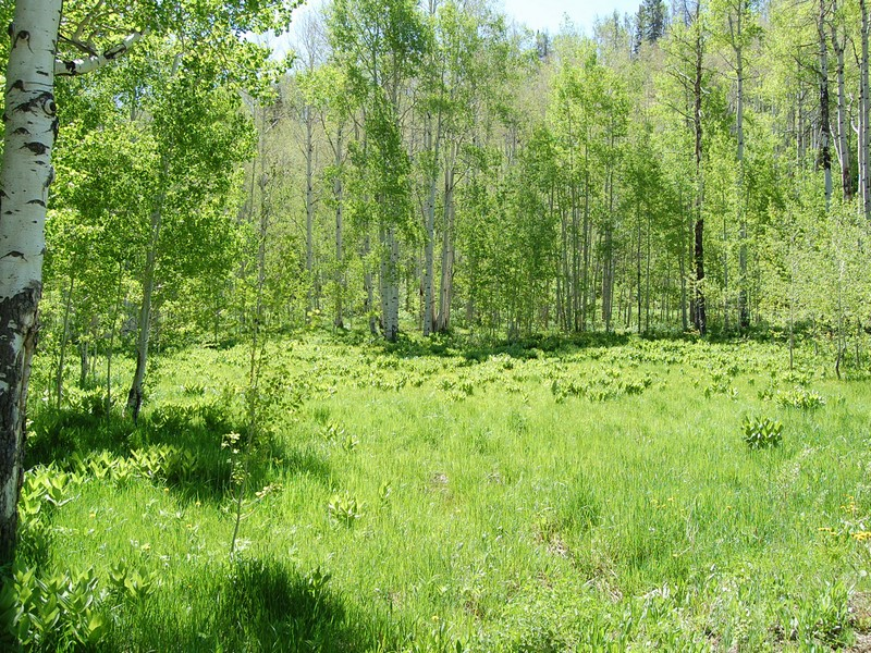 Land for Sale at Elkins Meadows @ Little Fish Creek 2925 Littlefish Trail Steamboat Springs, Colorado 80487 United States