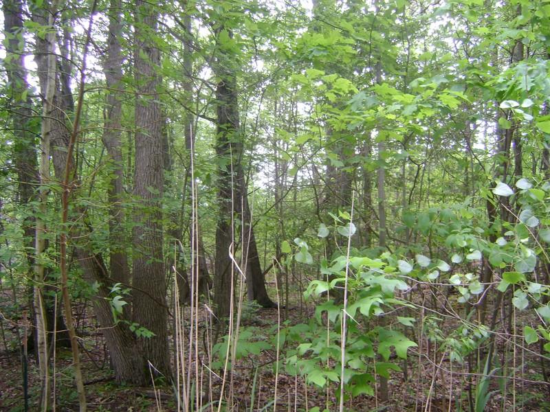Terreno para Venda às Highland 28 Highland Shores Sawyer, Michigan 49125 Estados Unidos