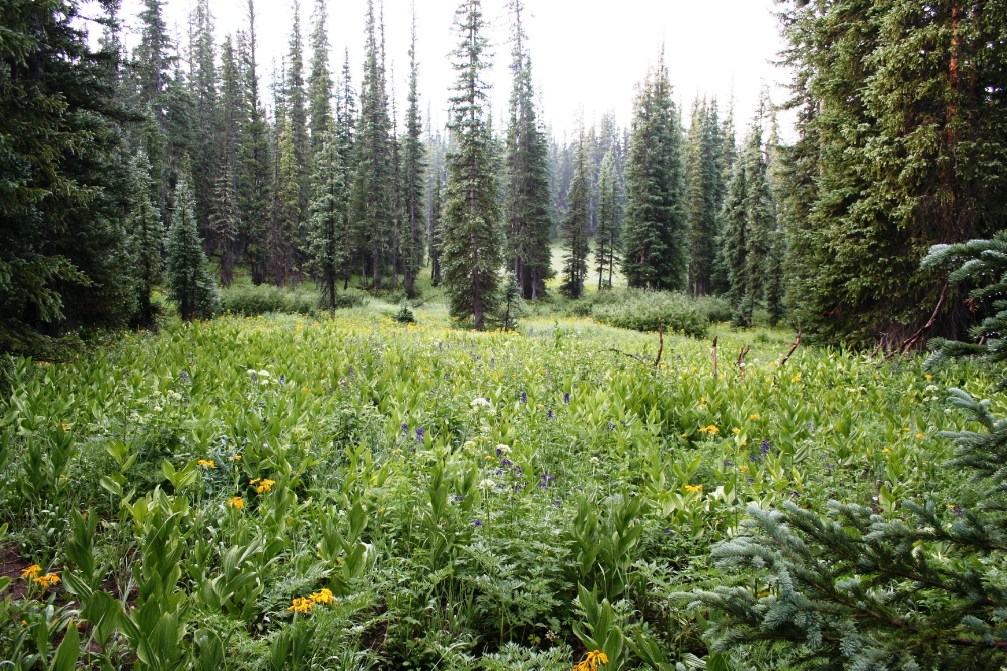 Land for Sale at Incomparable Mining Parcel 4236 Mineral Survey Crested Butte, Colorado 81224 United States