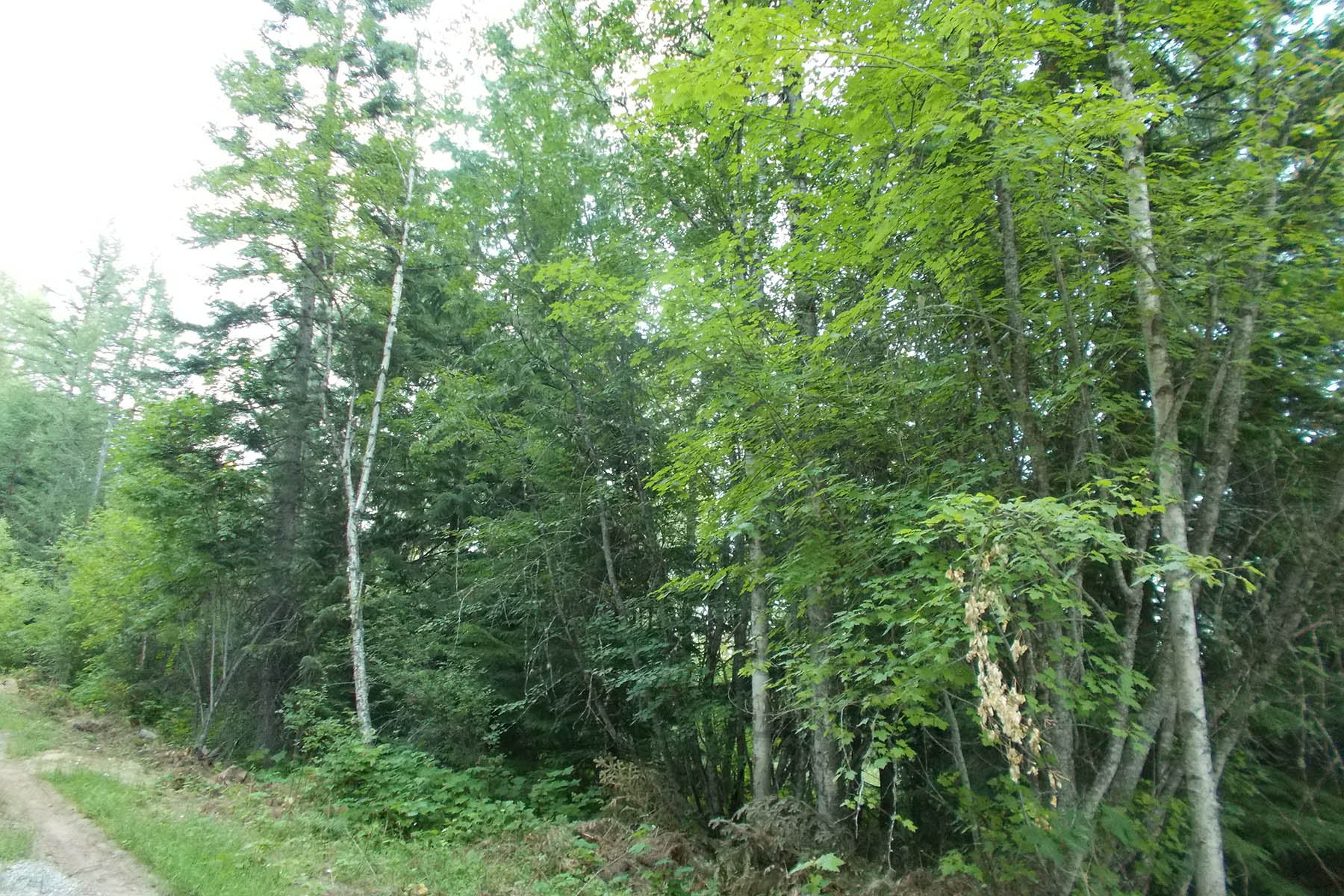 Land for Sale at Forested property just north of Sandpoint Lot 22 Scotts Lane Sandpoint, Idaho, 83864 United States