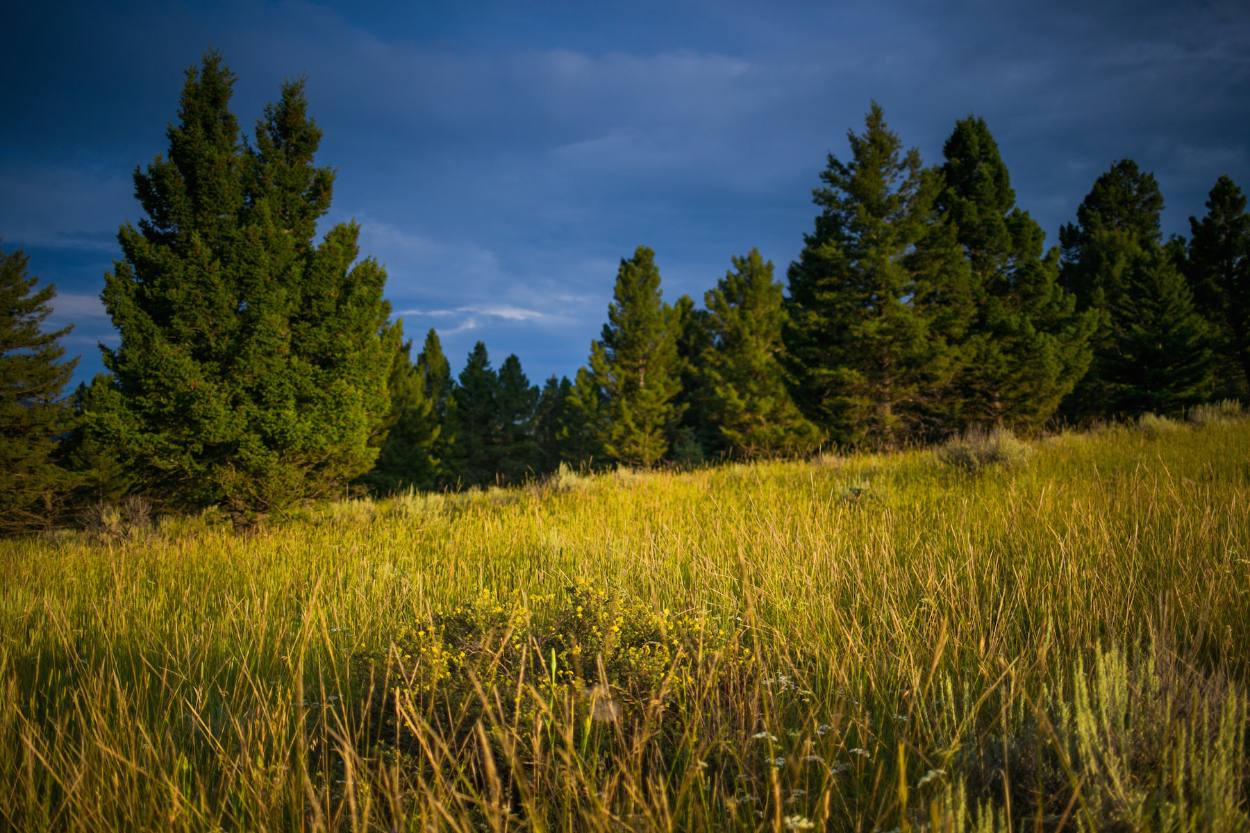 Property Of Porcupine Park Lot